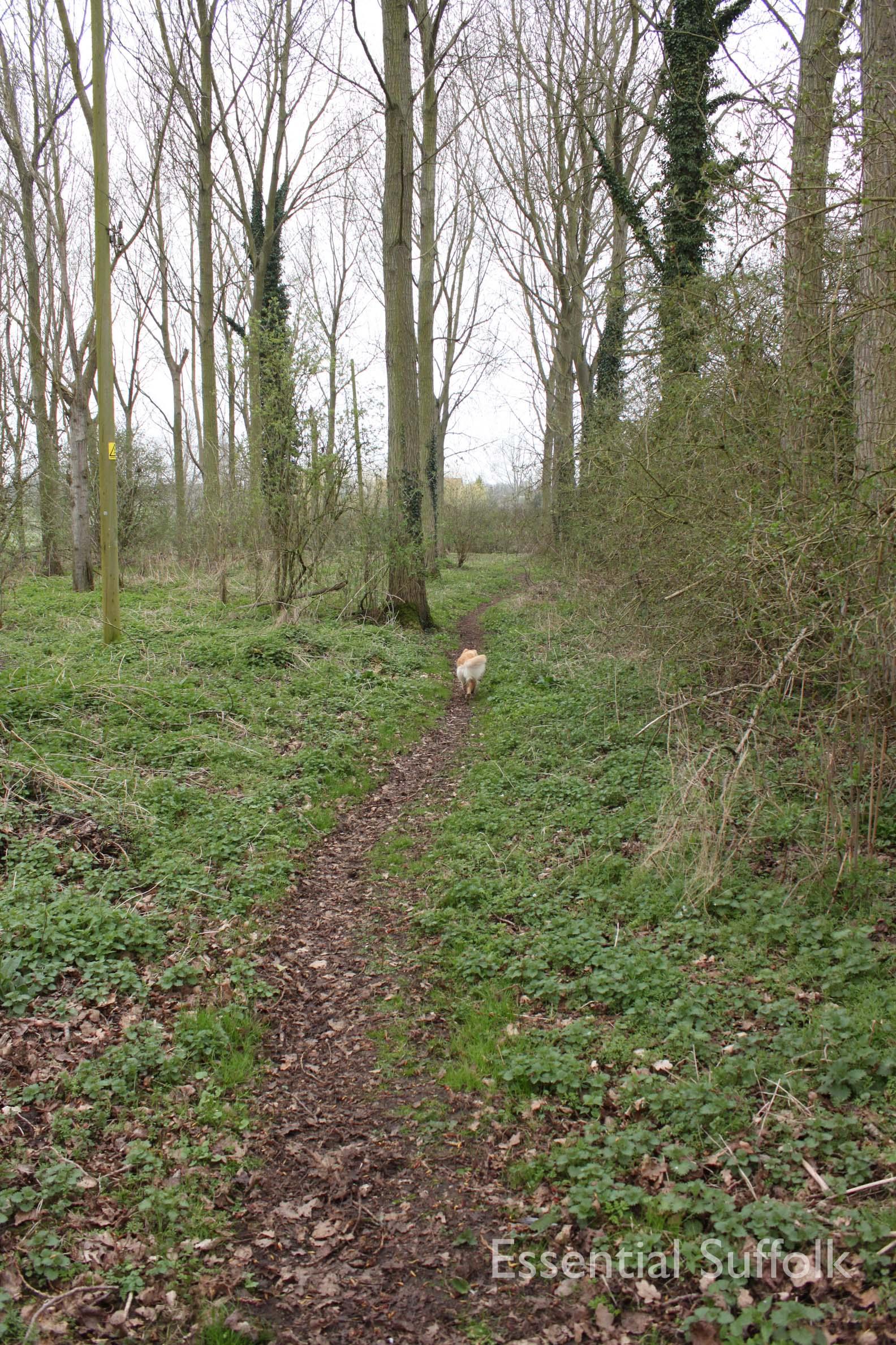 Cretingham dog walk14.jpg