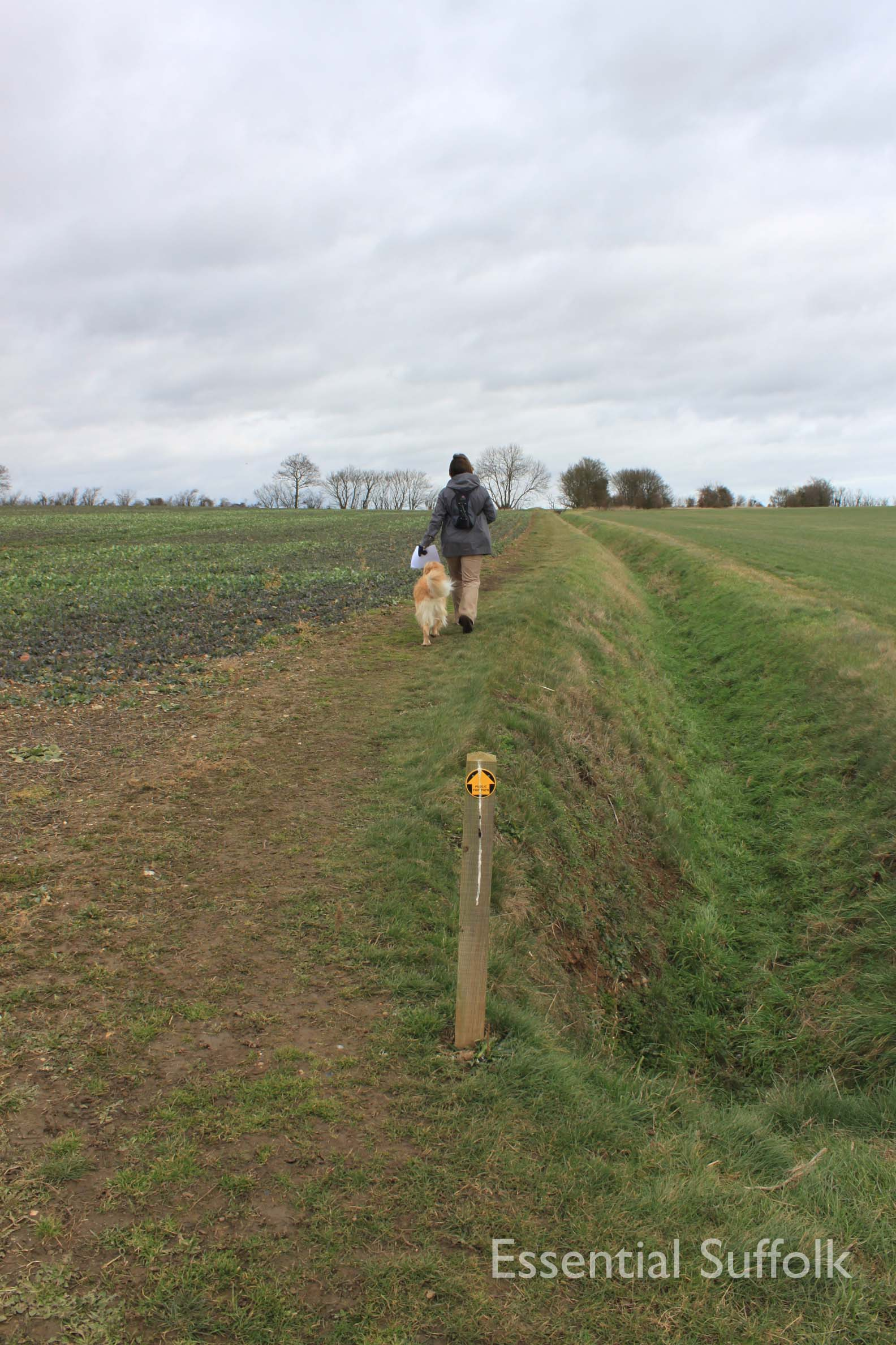 Chelsworth dog walk01.jpg
