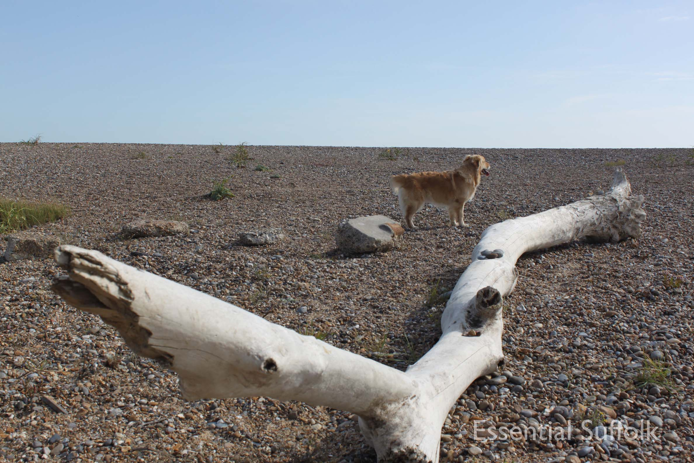 Dunwich dog walk 226.jpg