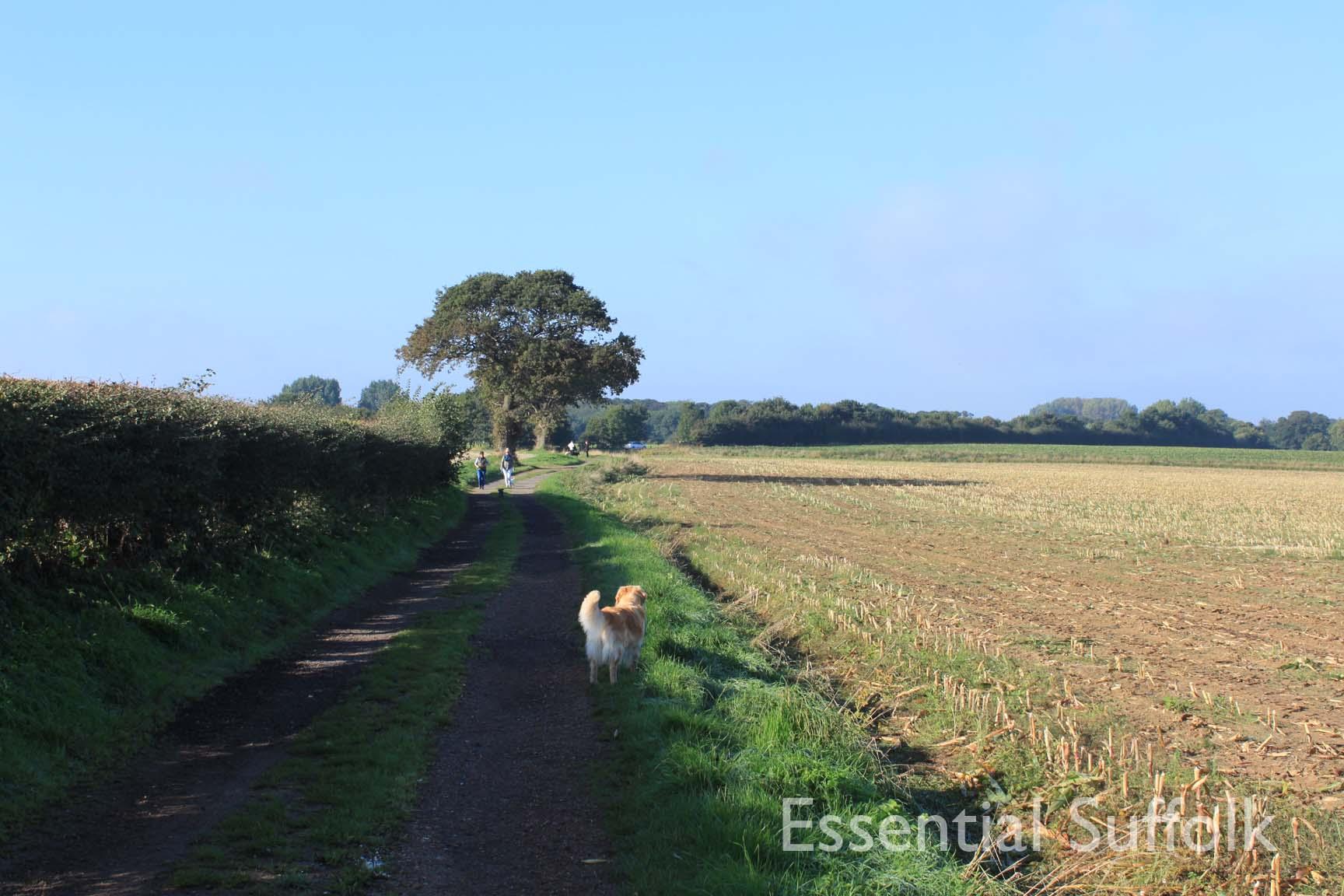 Felixstowe dog walk 02.jpg