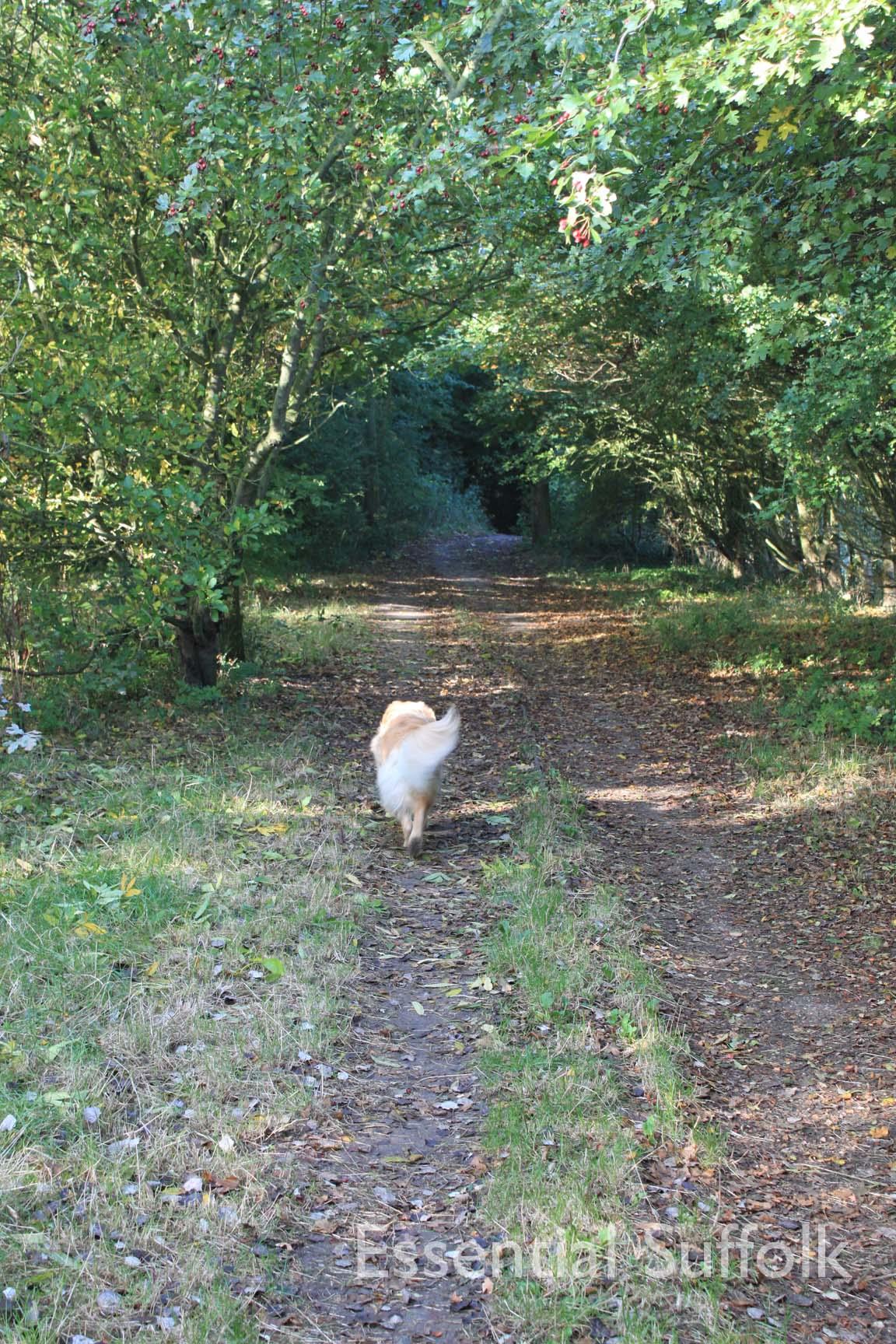 Felixstowe dog walk 03.jpg