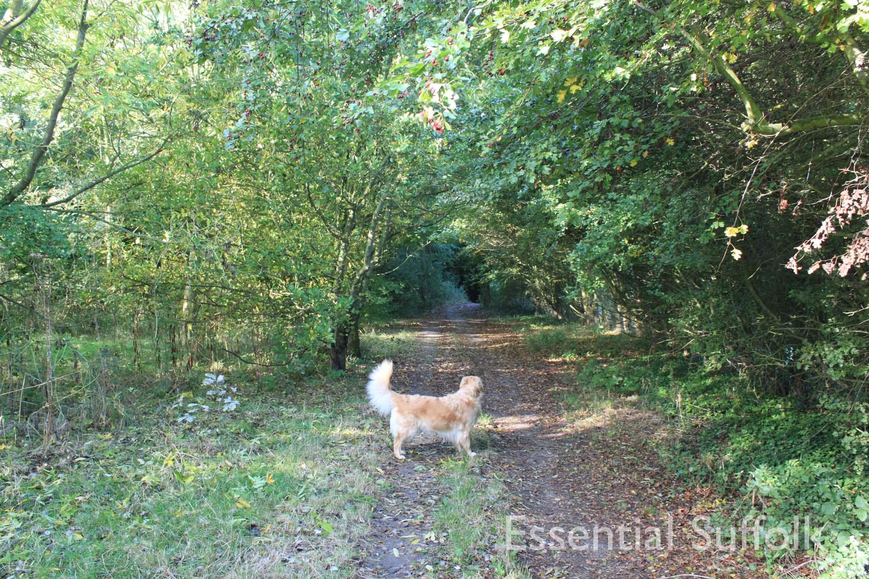 Felixstowe dog walk 04.jpg