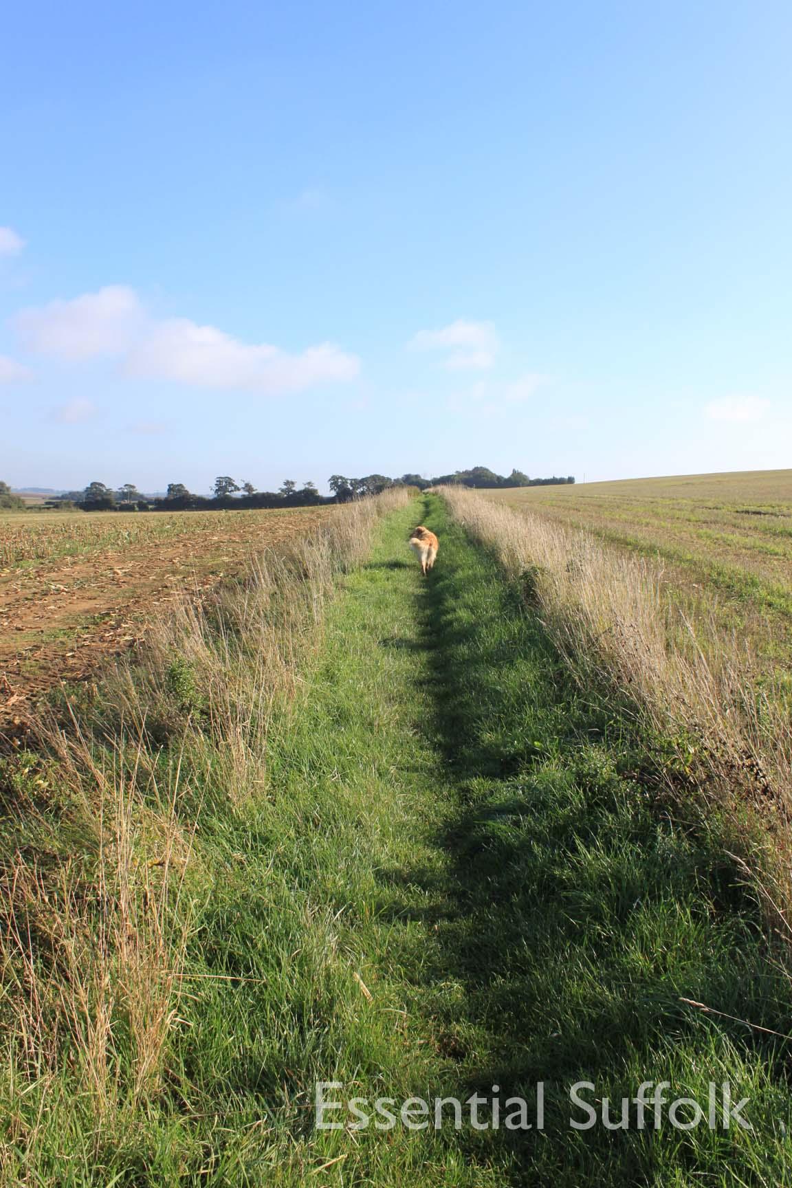 Felixstowe dog walk 06.jpg