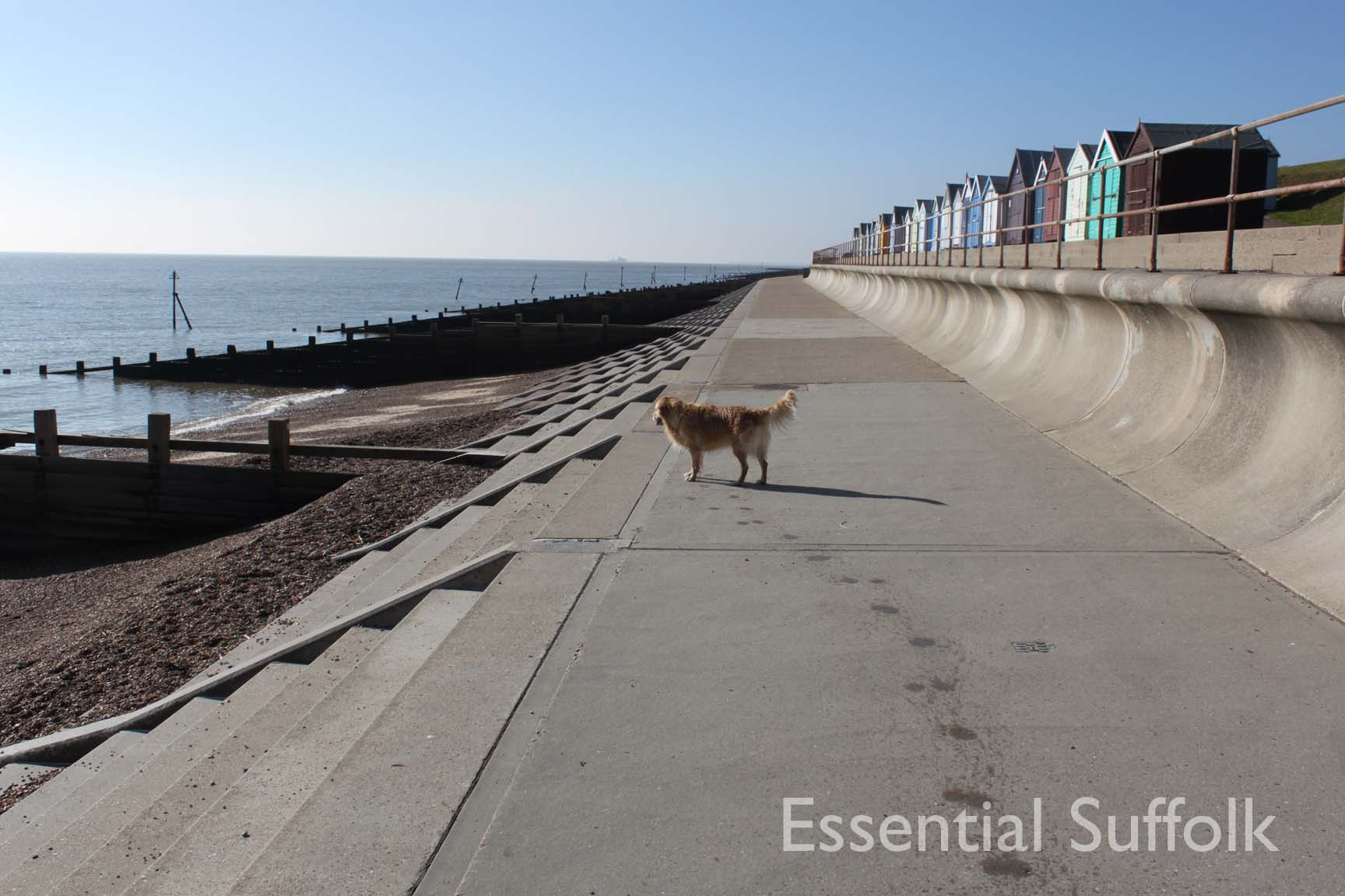 Felixstowe dog walk 09.jpg