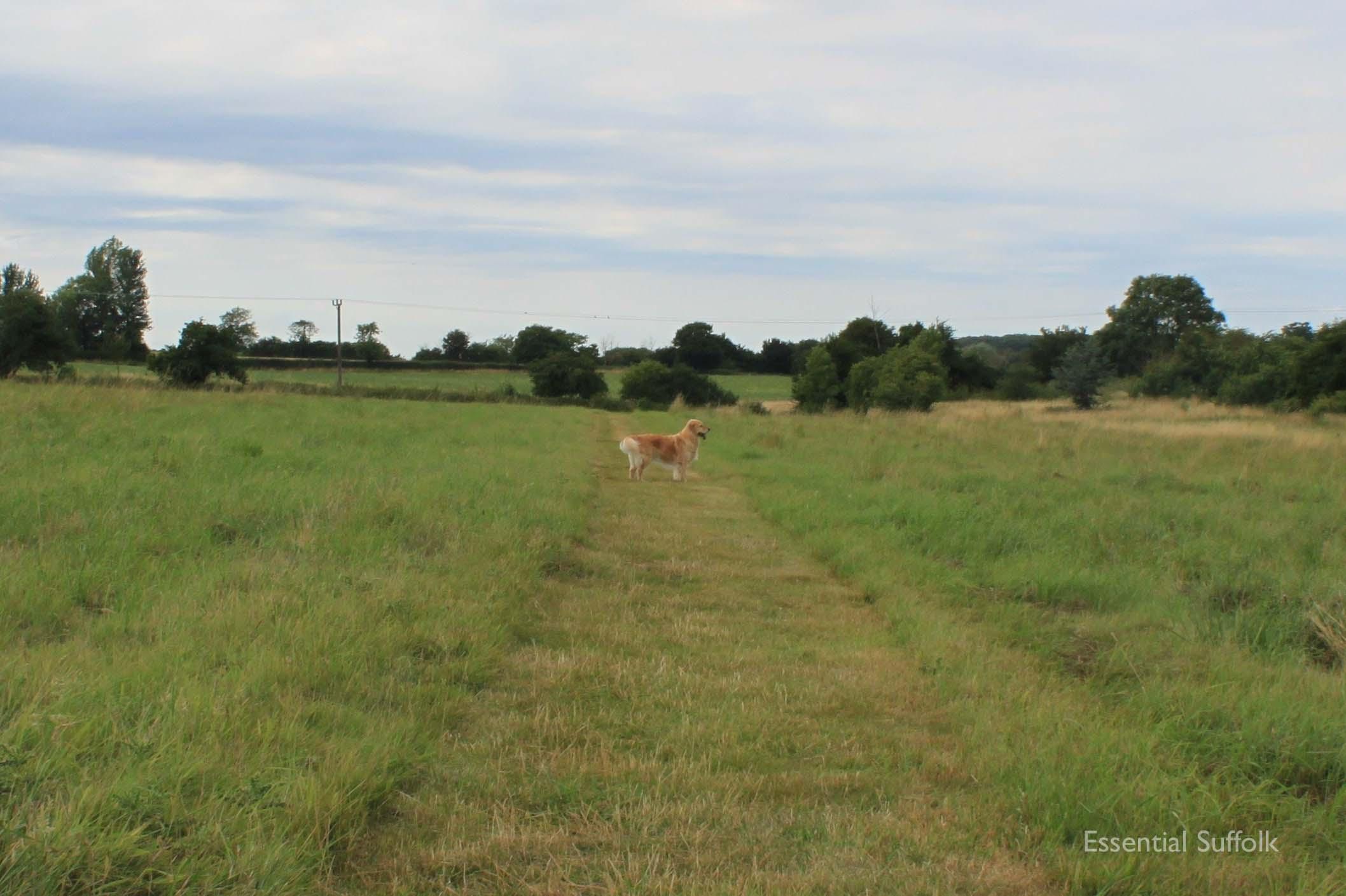 Framlingham Dog Walk04.jpg