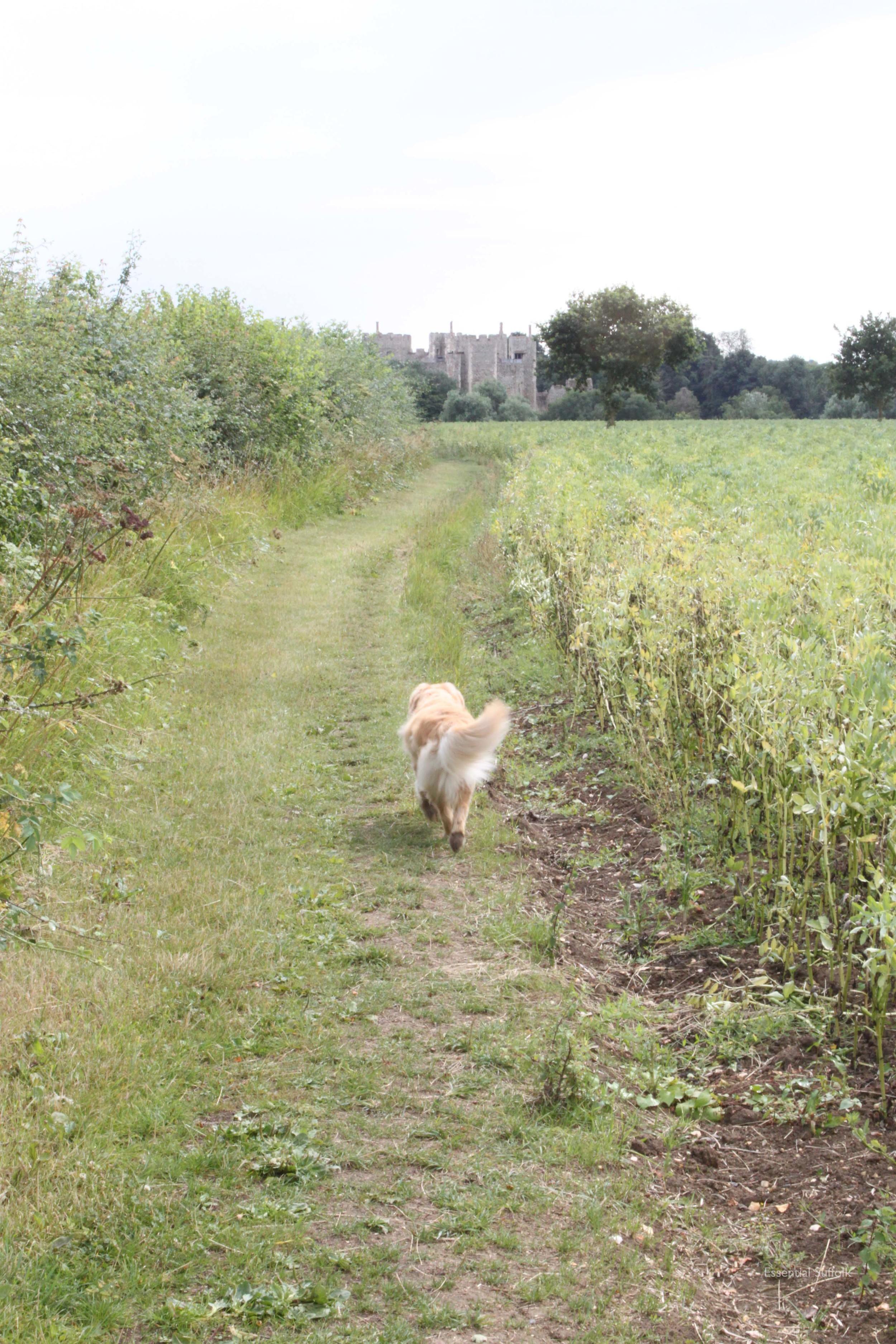 Framlingham Dog Walk07.jpg