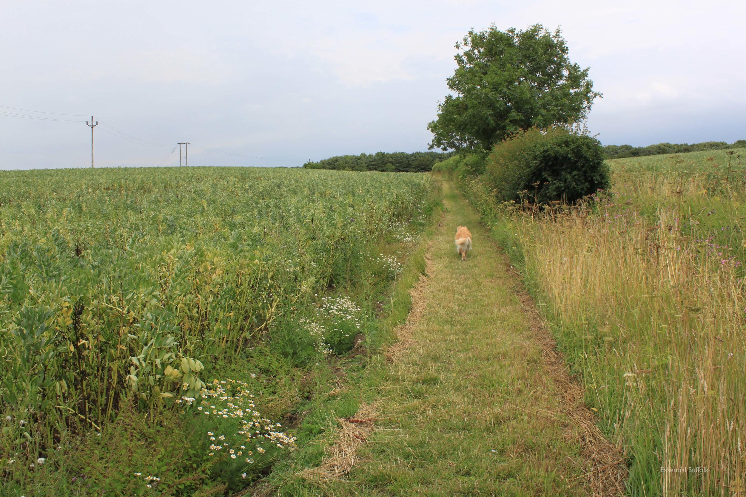 Framlingham Dog Walk05.jpg