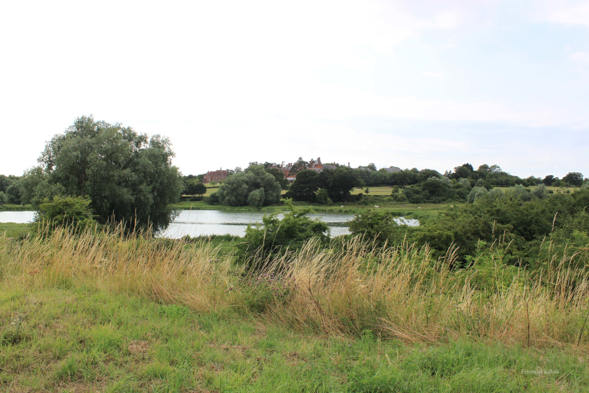 Framlingham Dog Walk09.jpg