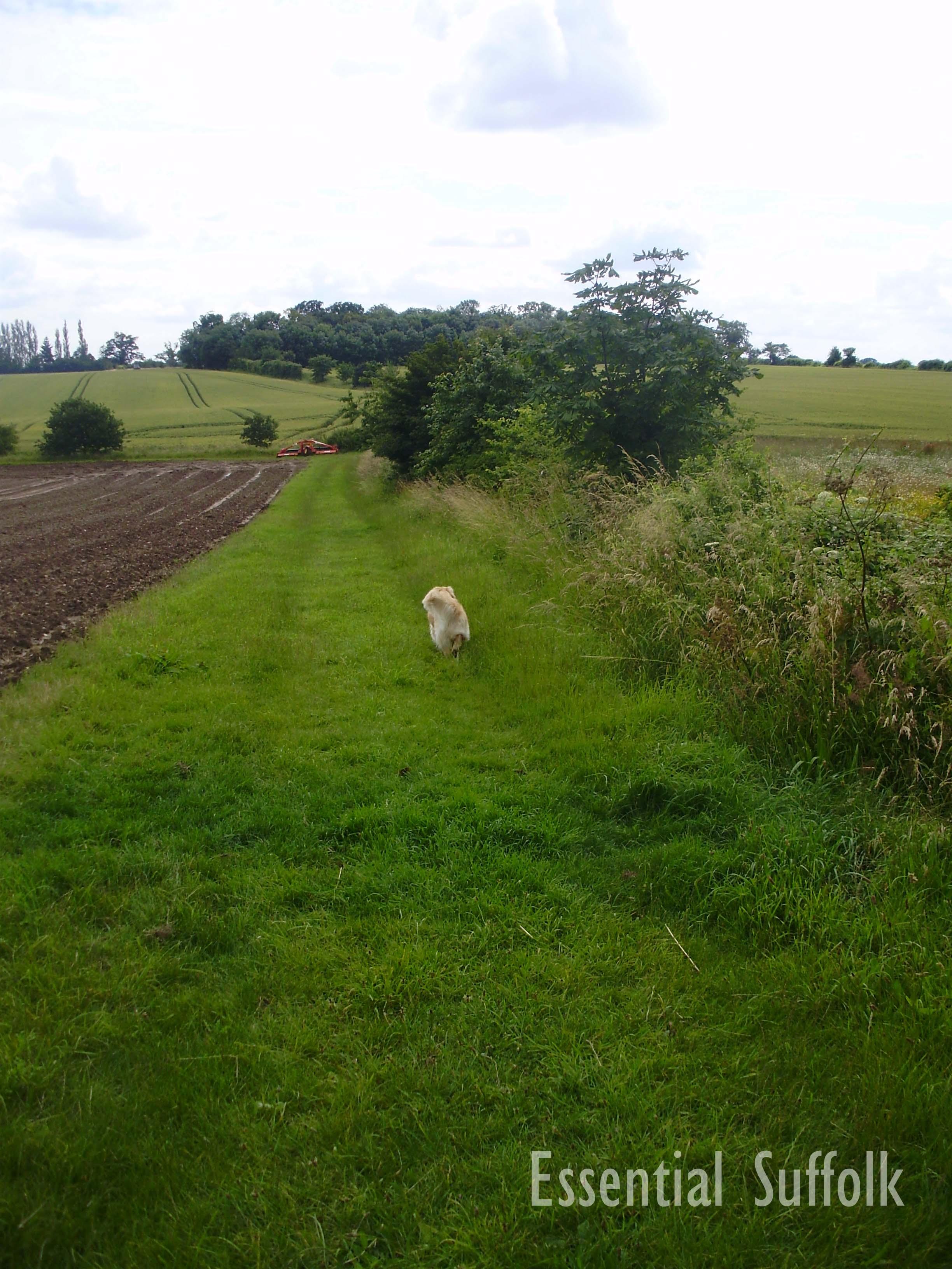 Grundisburgh Dog Walk 205.jpg