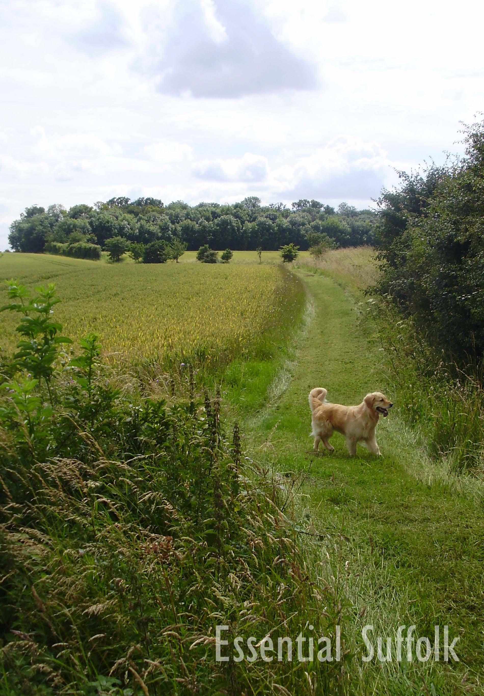Grundisburgh Dog Walk 206.jpg