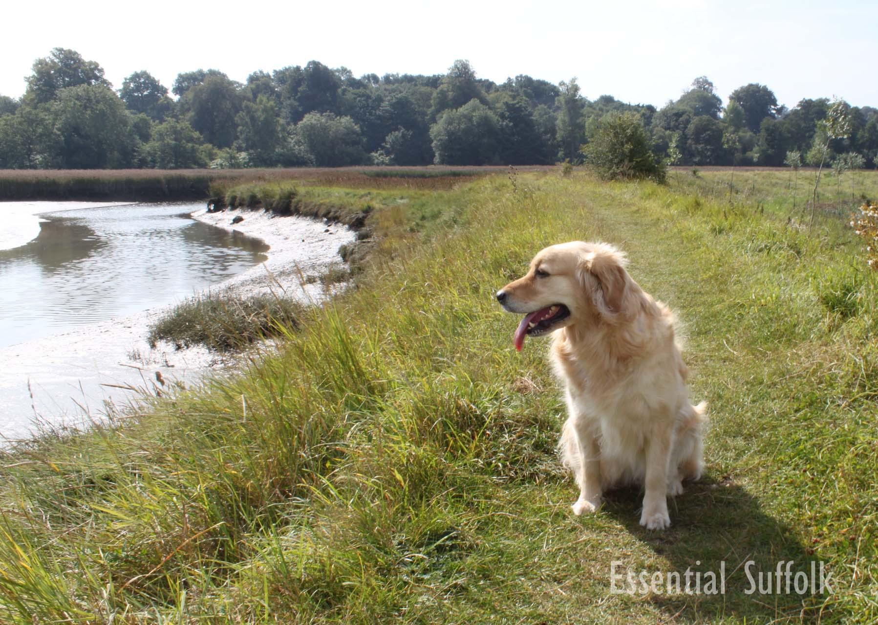 Melton Dog Walk 105.jpg