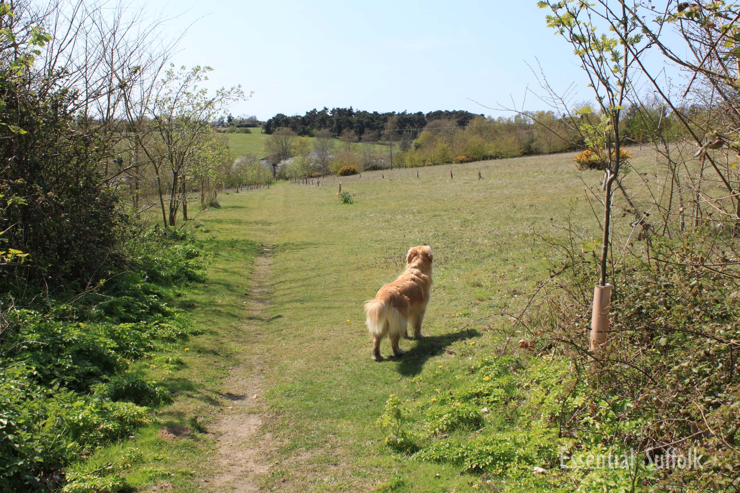 Melton Dog Walk 2 09.jpg