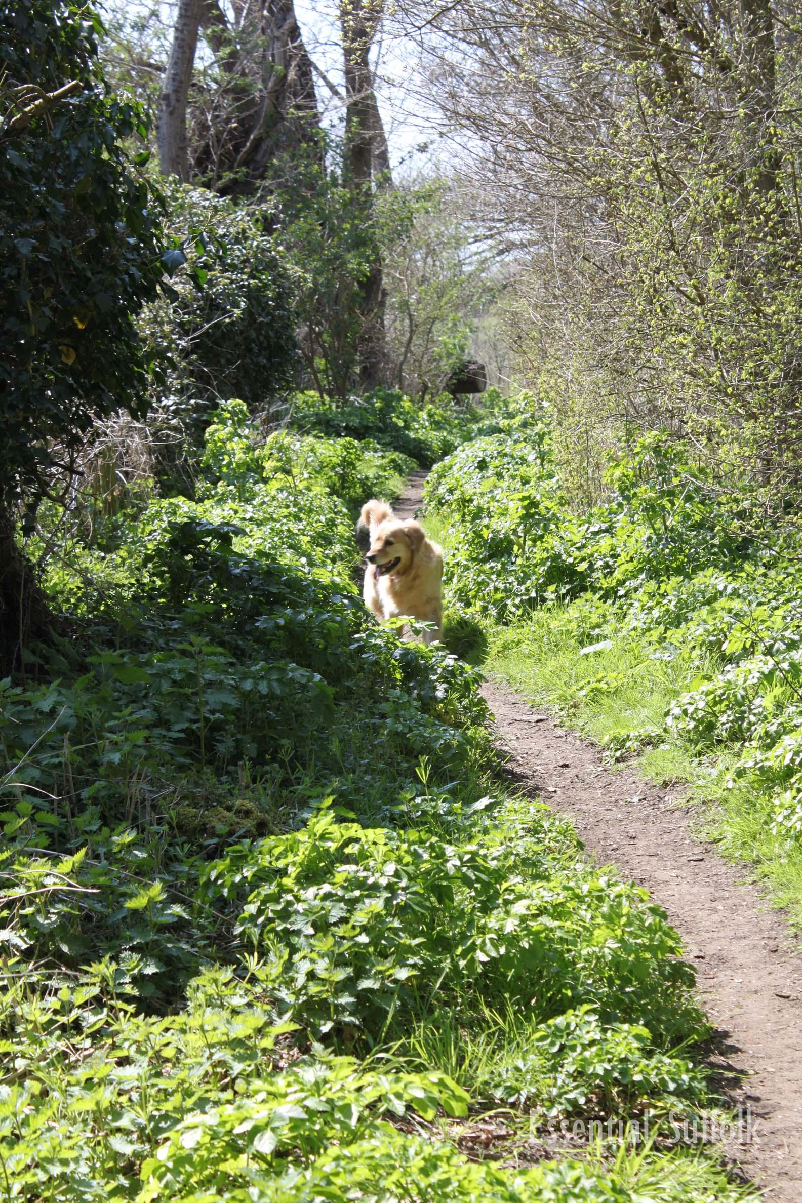 Melton Dog Walk 2 08.jpg