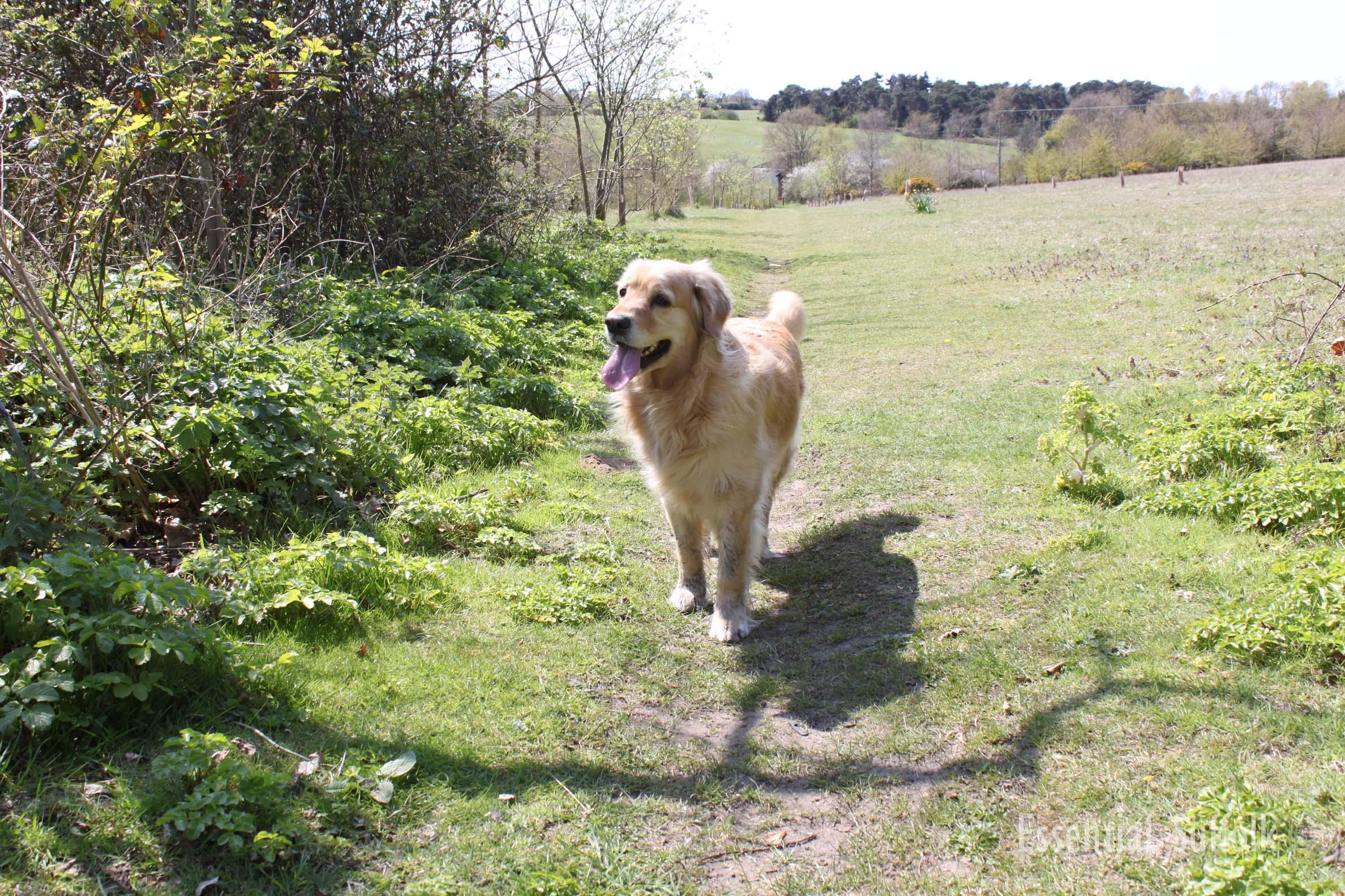 Melton Dog Walk 2 10.jpg