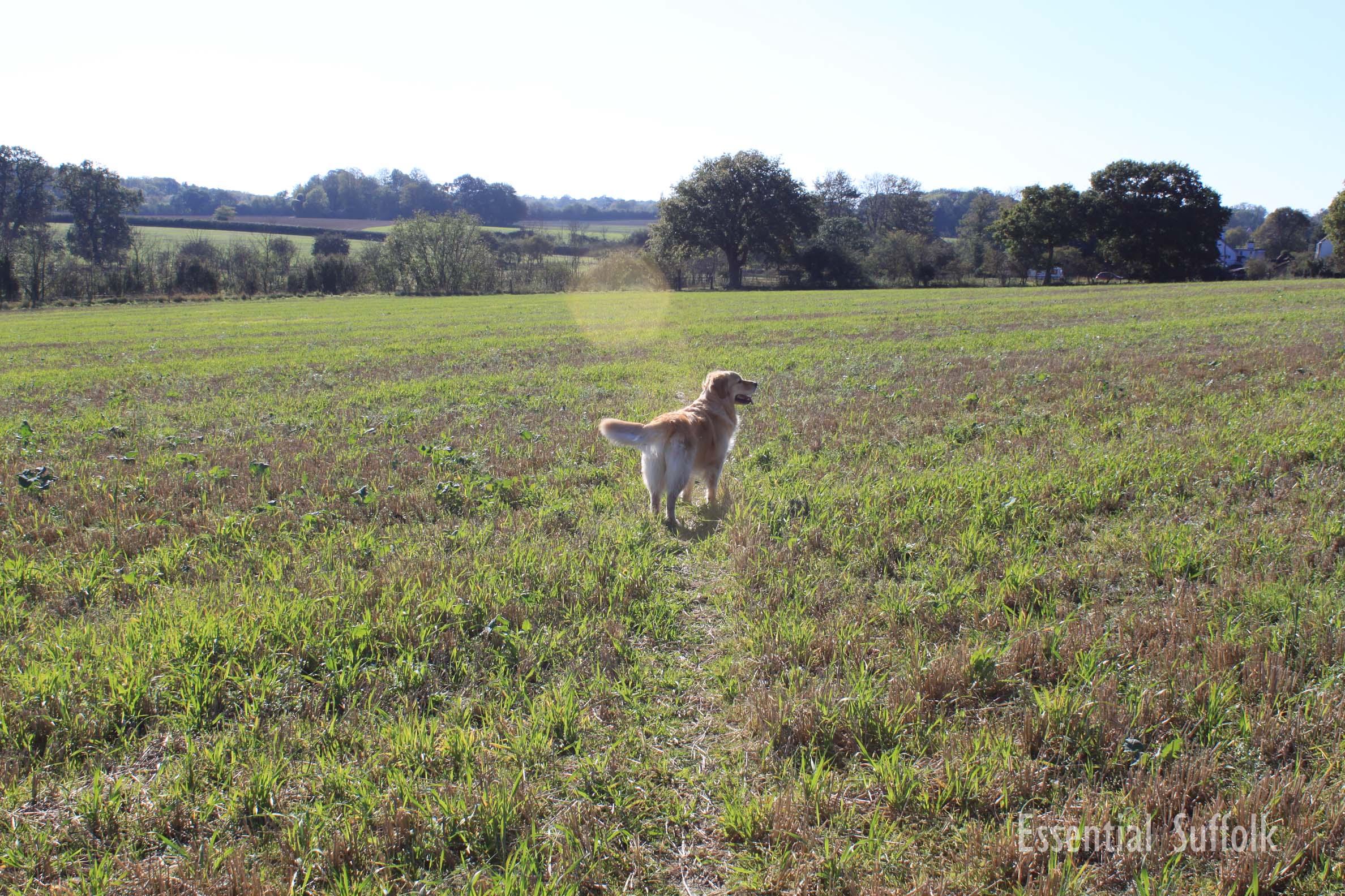 Middleton Dog Walk 102.jpg