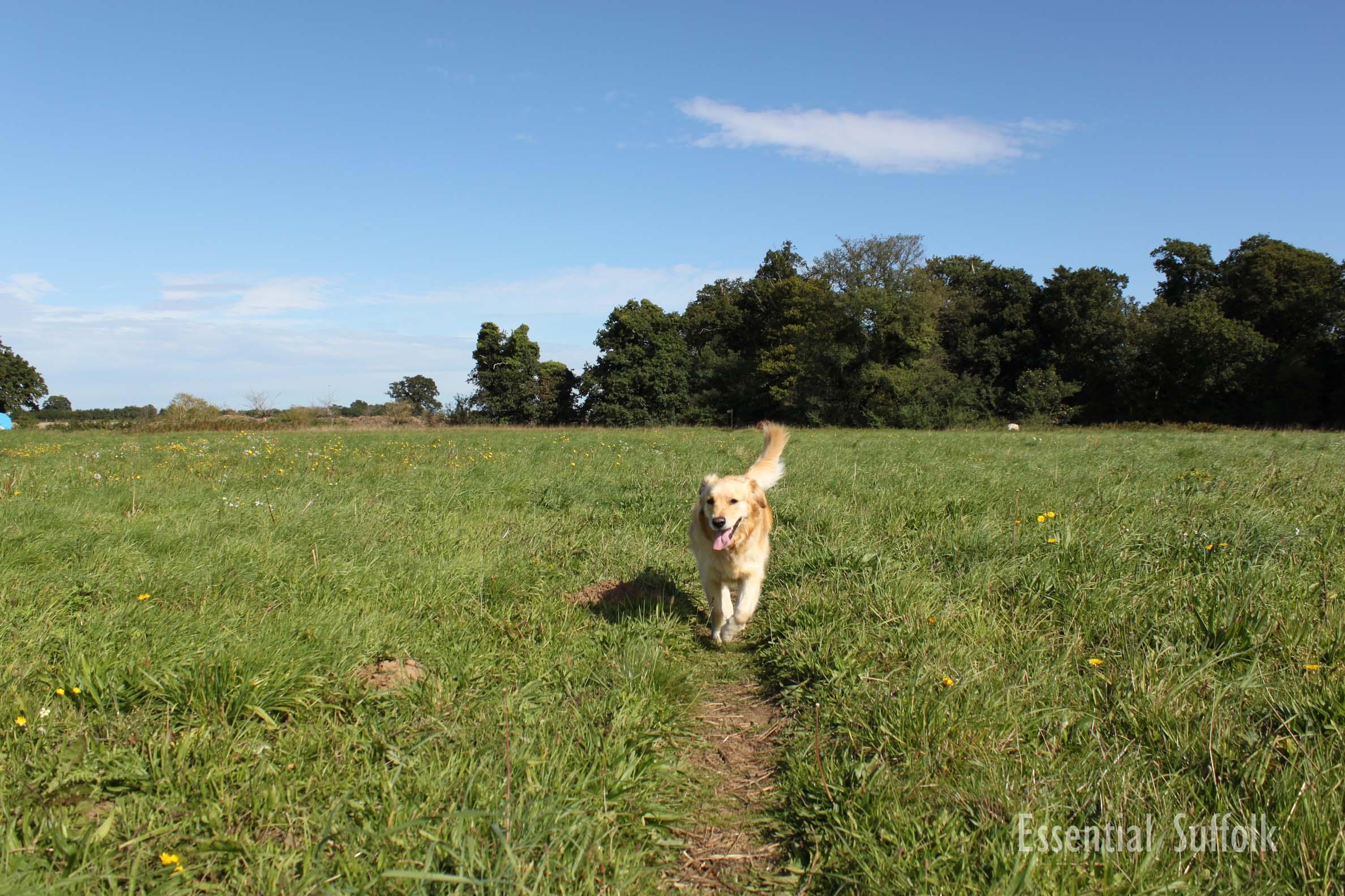 Newbourne Dog Walk 1 02.jpg