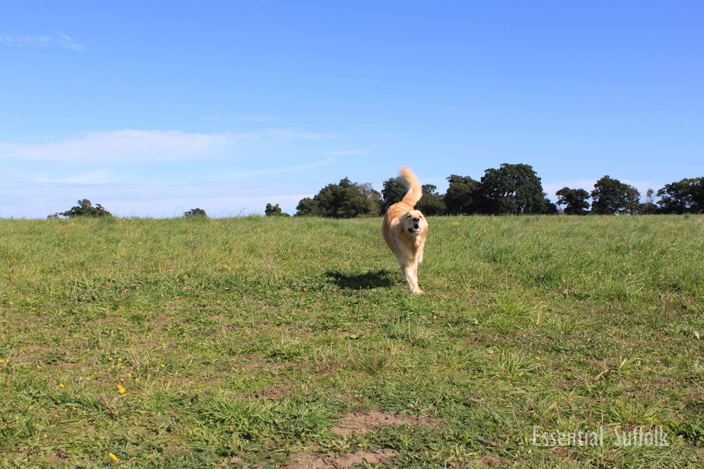 Newbourne Dog Walk 1 01.jpg