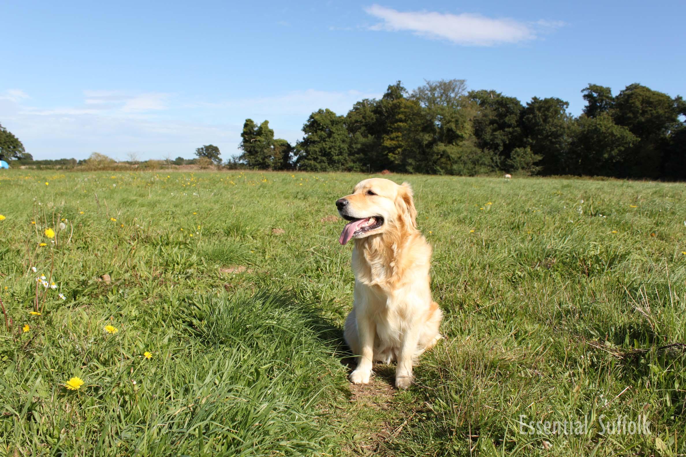 Newbourne Dog Walk 1 03.jpg