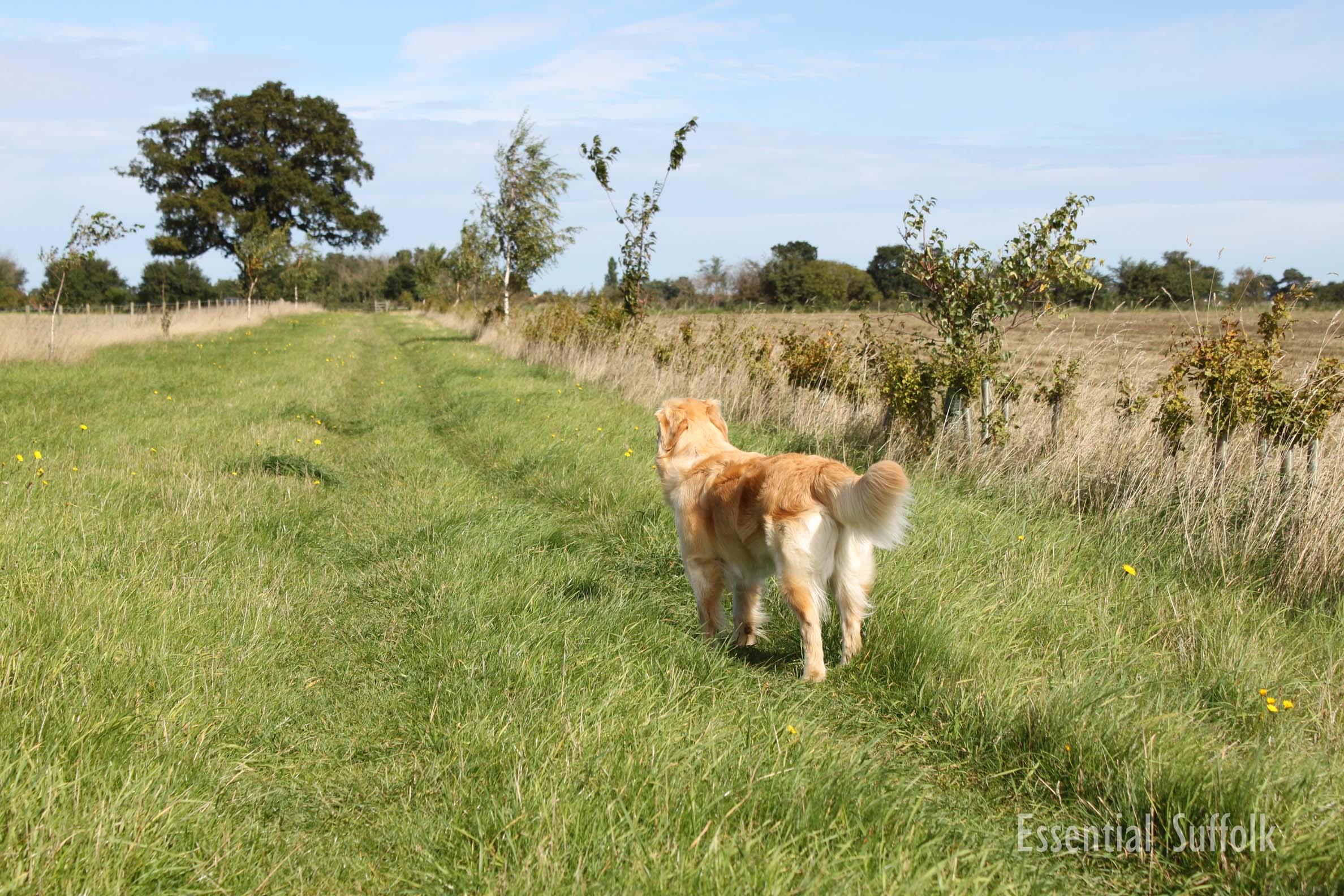Newbourne Dog Walk 1 04.jpg