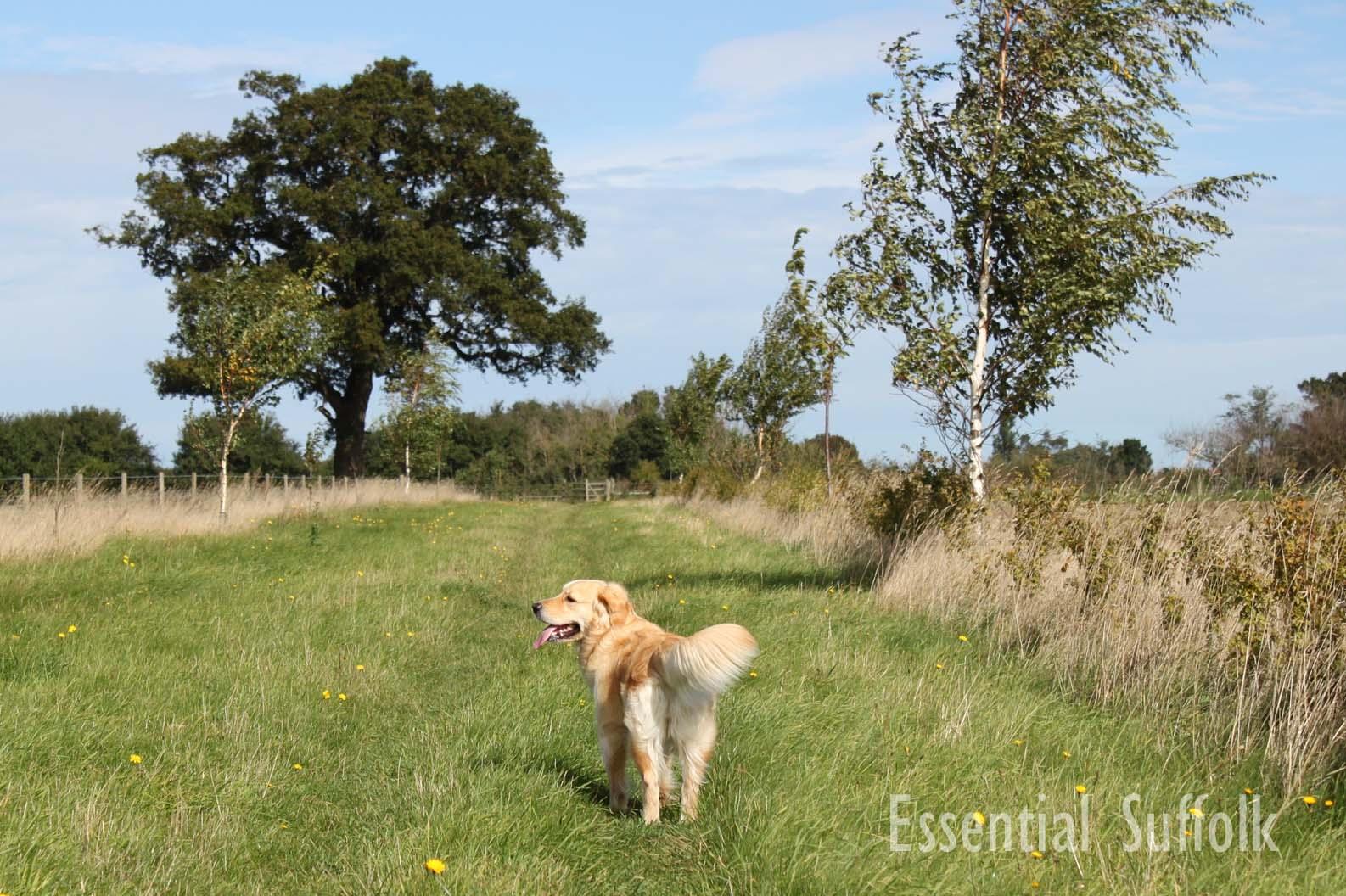 Newbourne Dog Walk 1 05.jpg