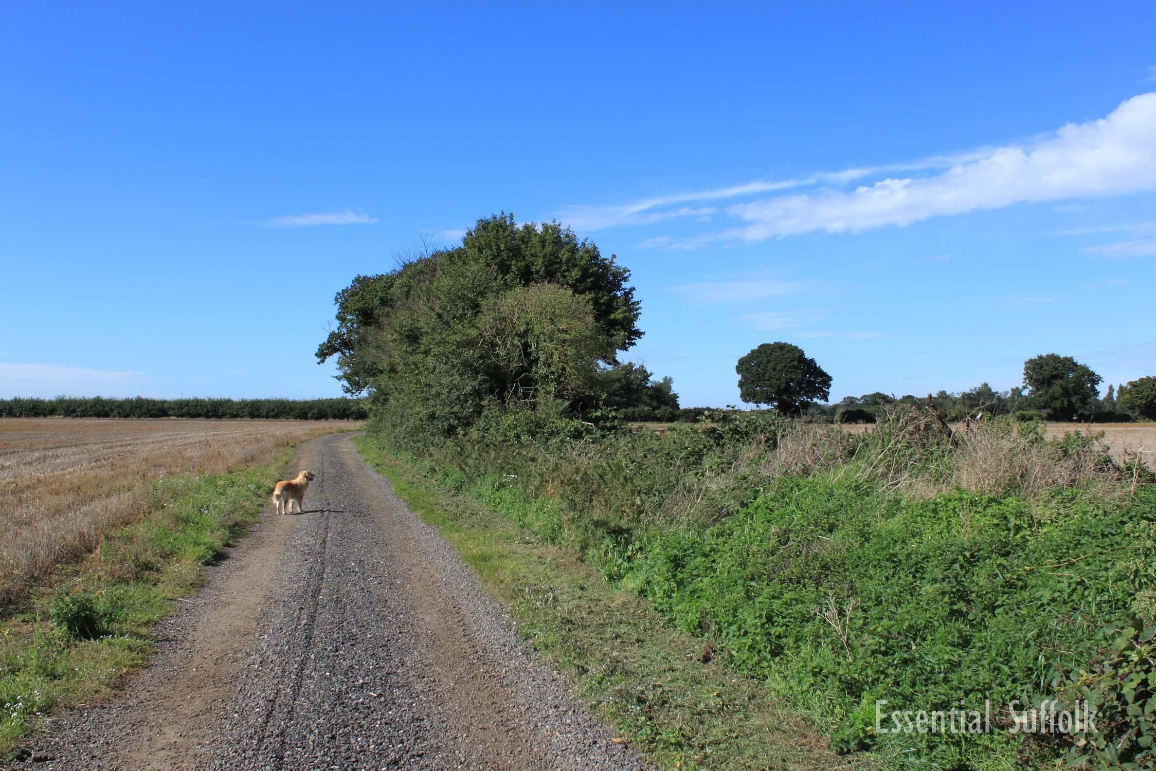 Newbourne Dog Walk 1 10.jpg