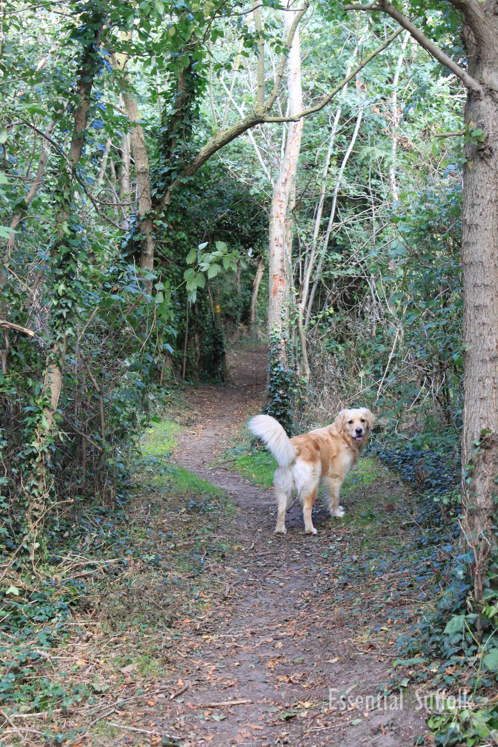 Newbourne Dog Walk 1 09.jpg