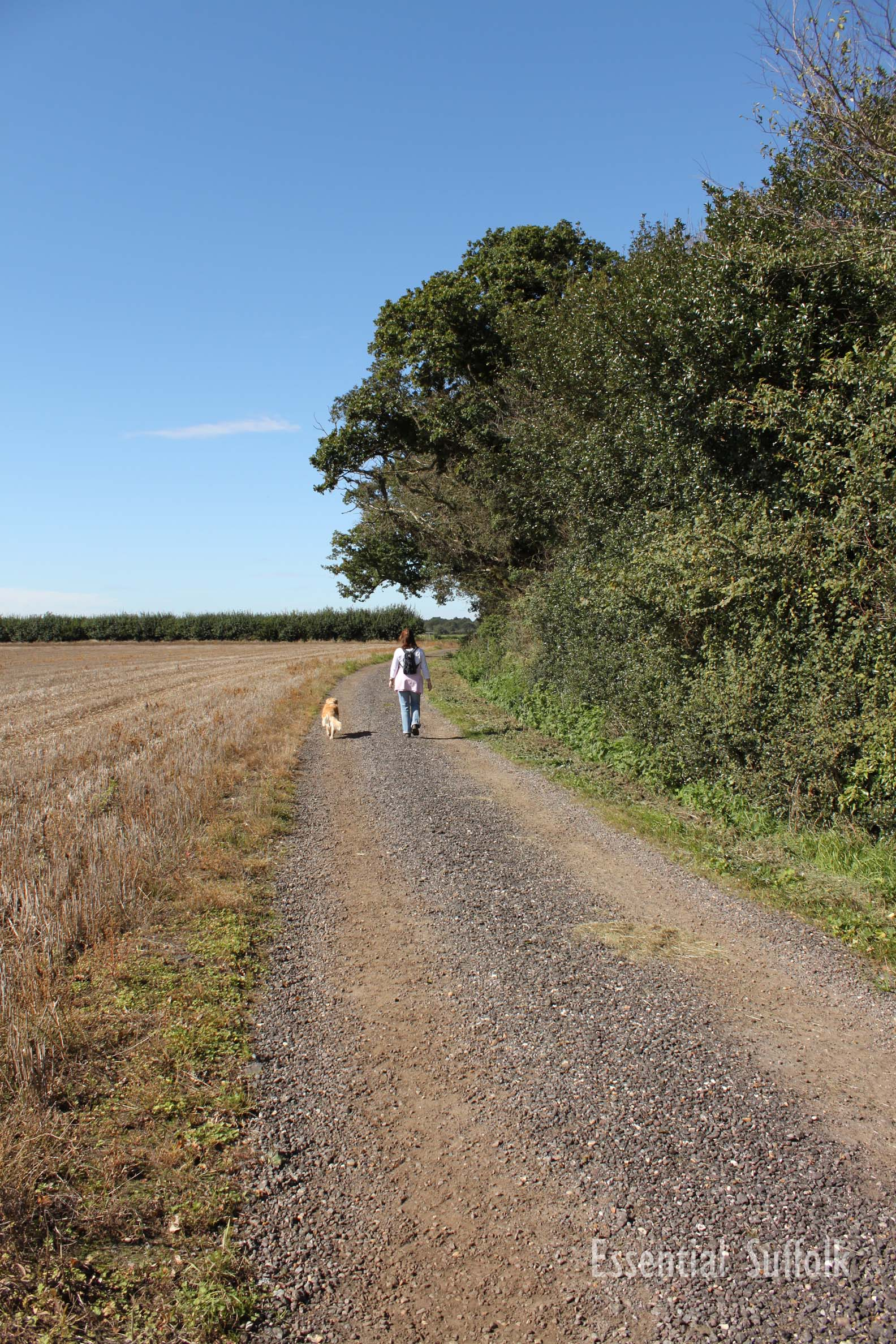 Newbourne Dog Walk 1 11.jpg