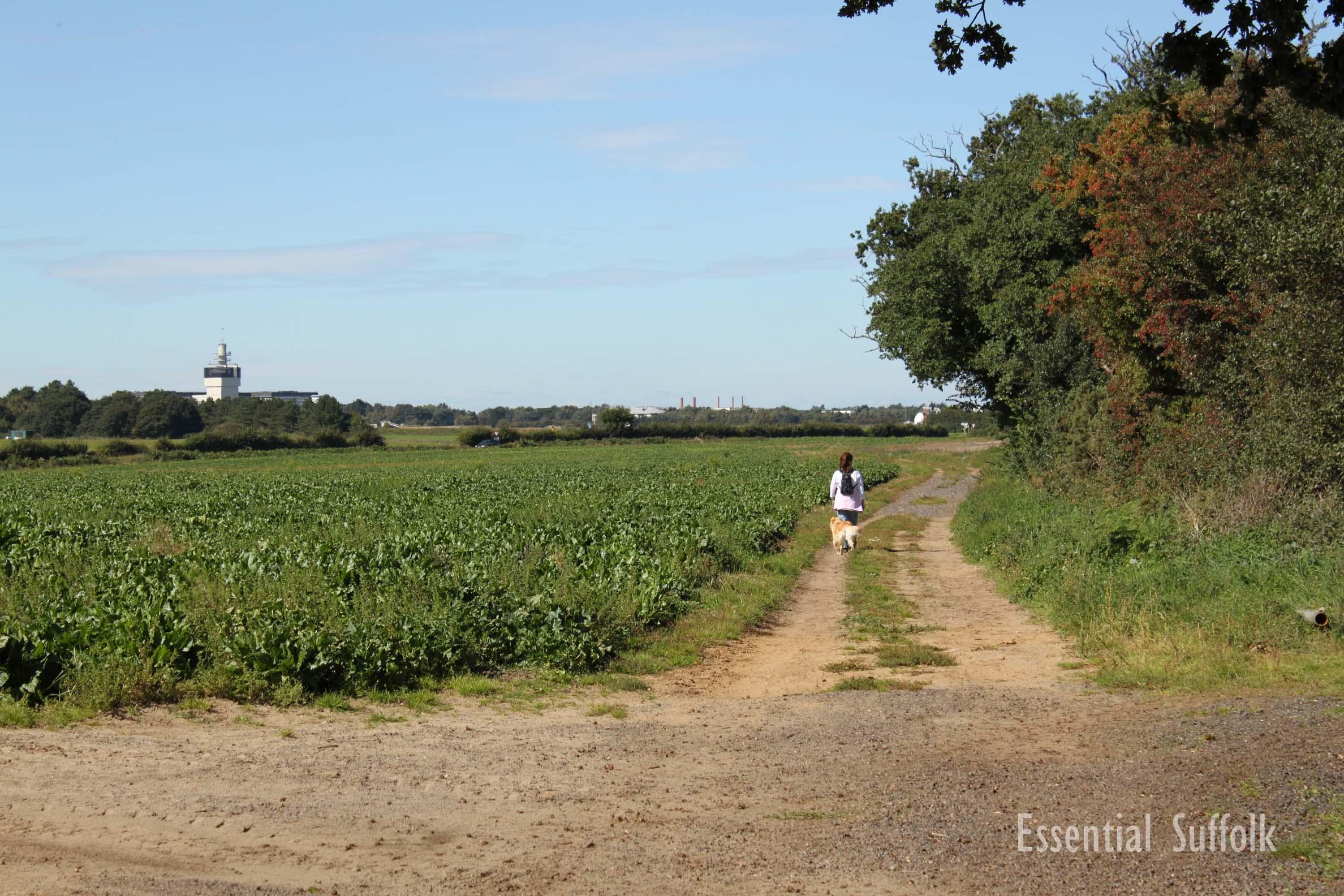 Newbourne Dog Walk 1 12.jpg