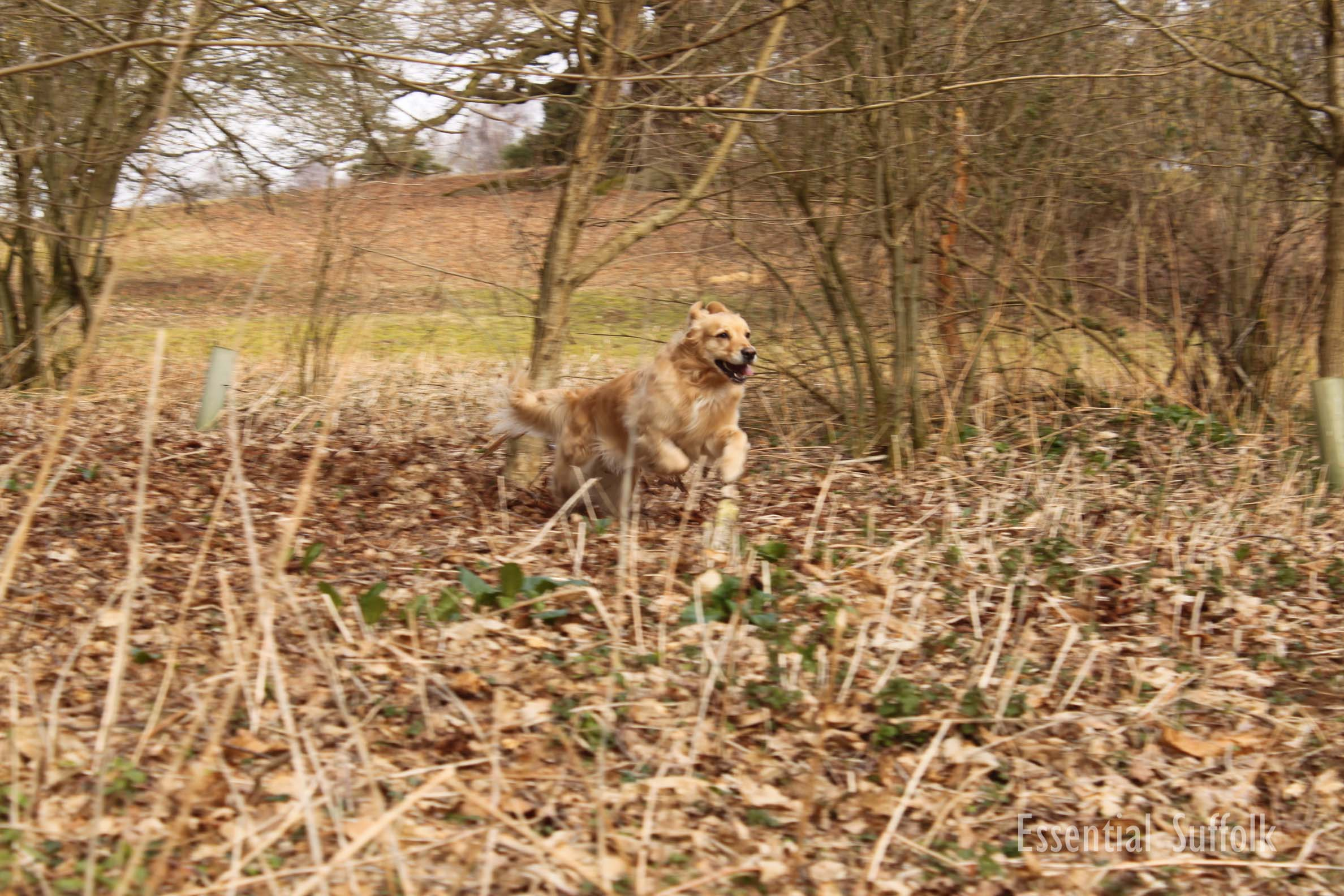Newbourne Dog Walk 2 03.jpg