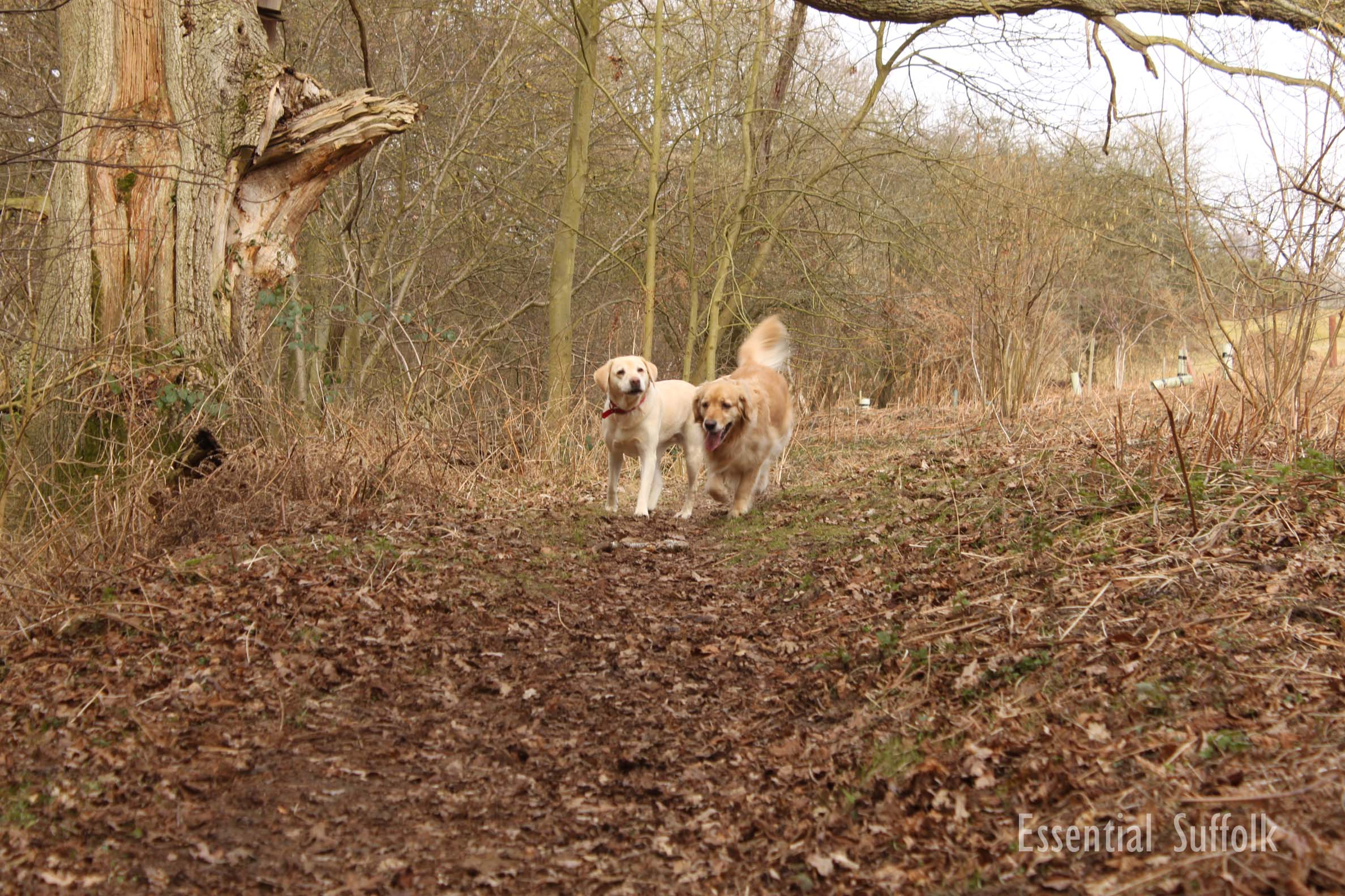 Newbourne Dog Walk 2 04.jpg