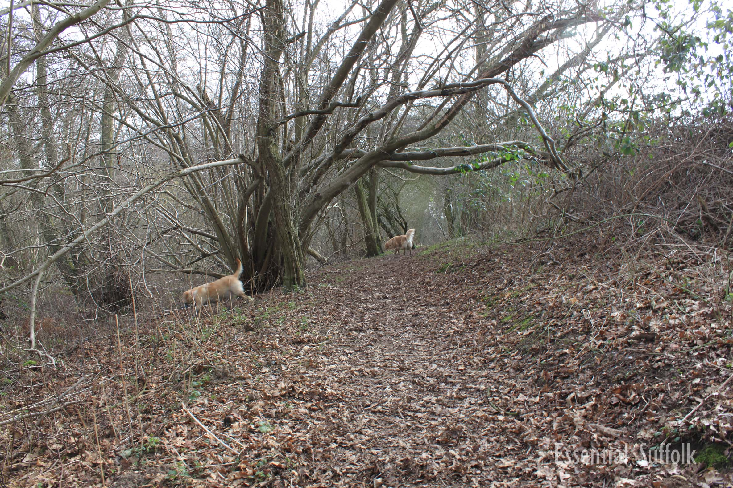 Newbourne Dog Walk 2 11.jpg