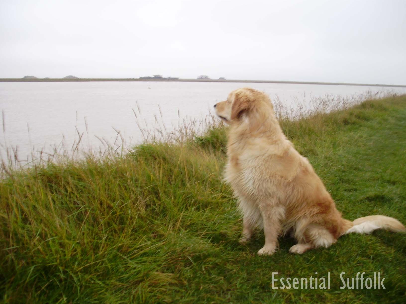 Orford Dog Walk10.jpg