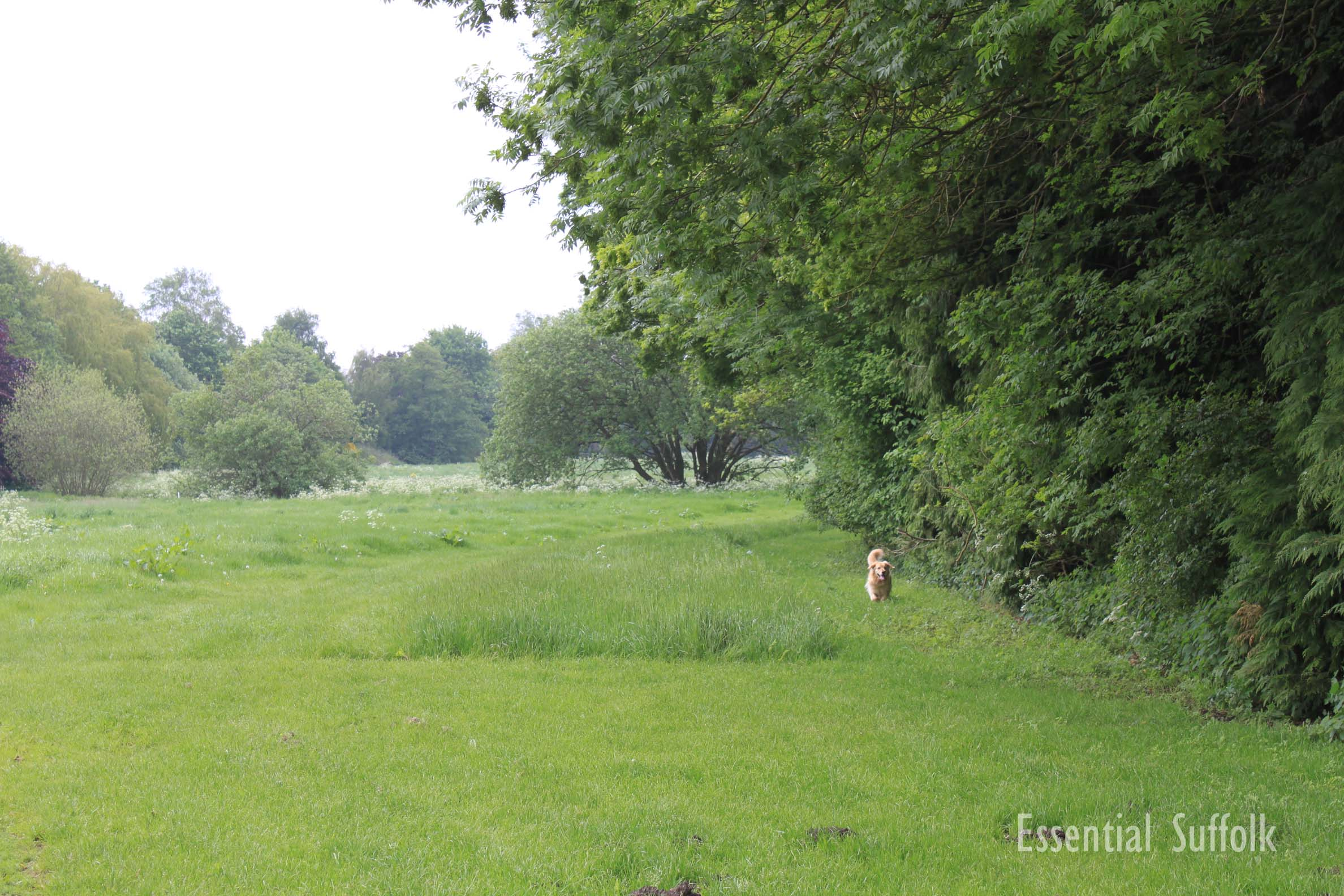 Pettistree Dog Walk02.jpg