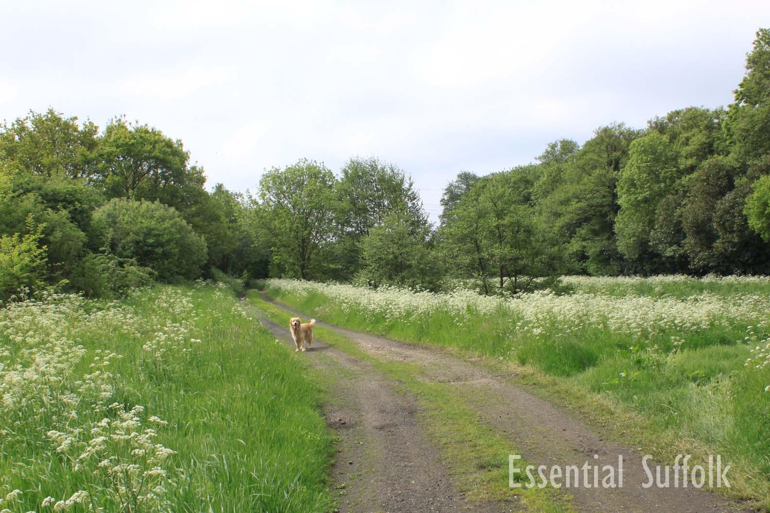 Pettistree Dog Walk04.jpg