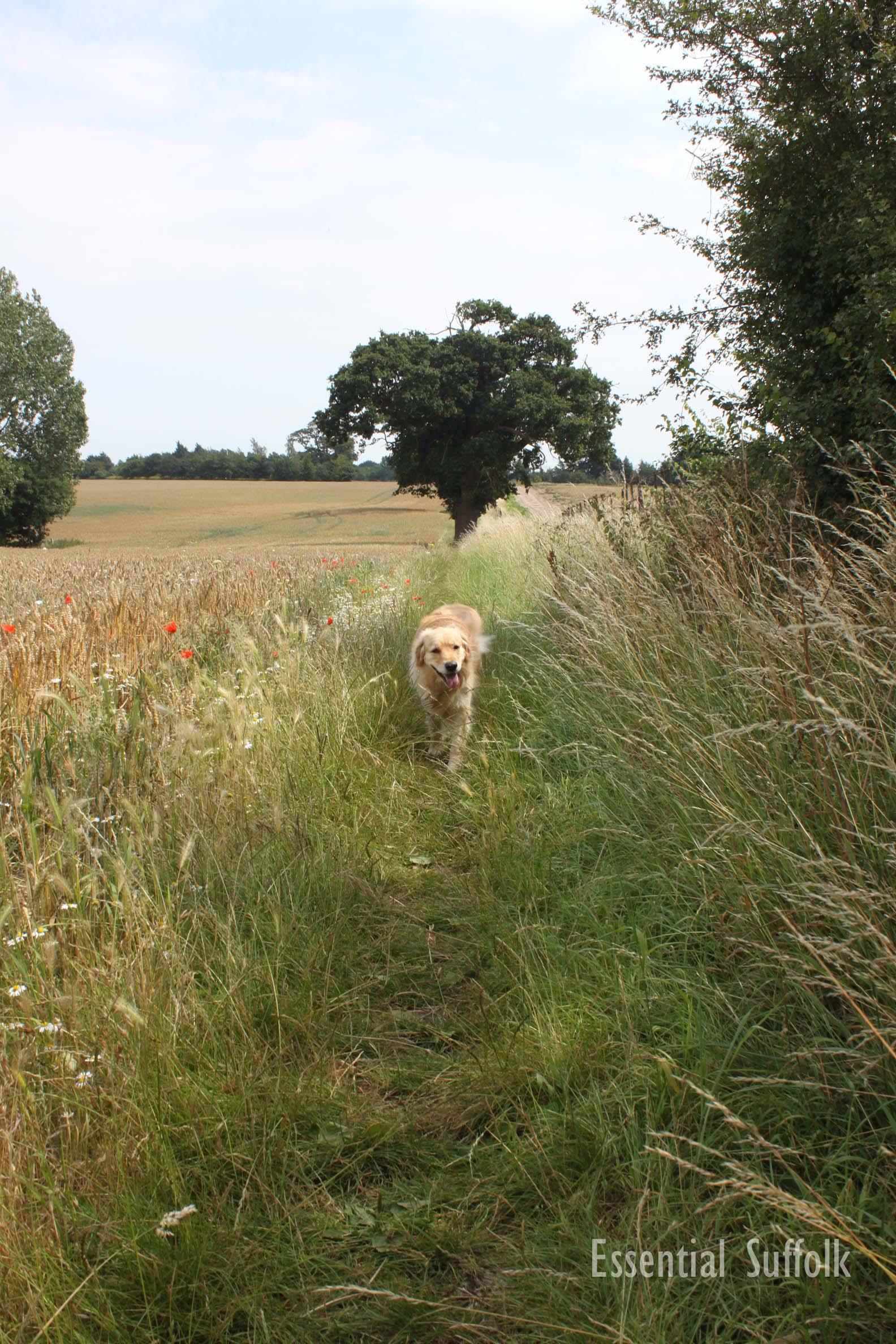 Pin Mill Dog Walk 1 16.jpg