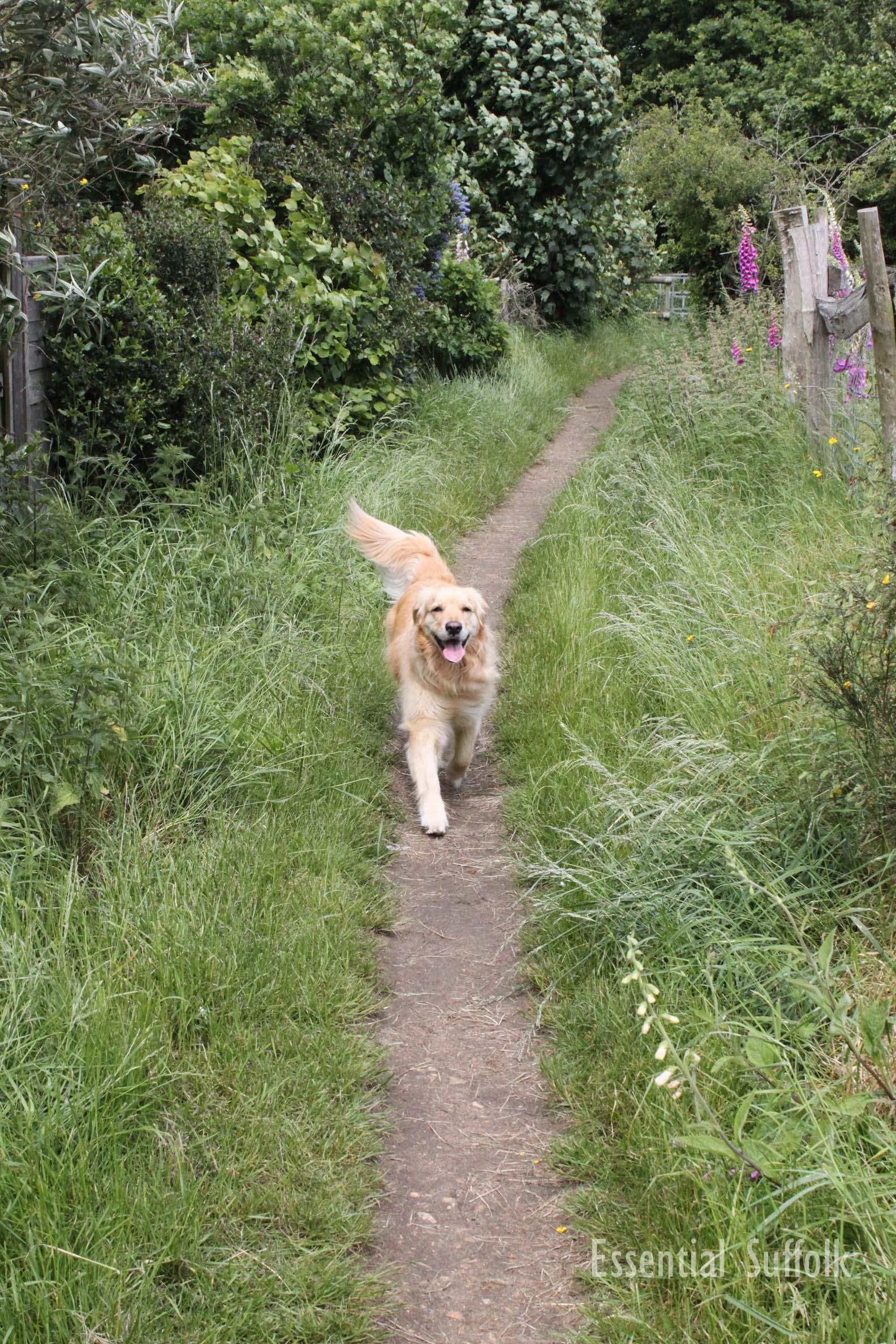 Pin Mill Dog Walk 2 02.jpg
