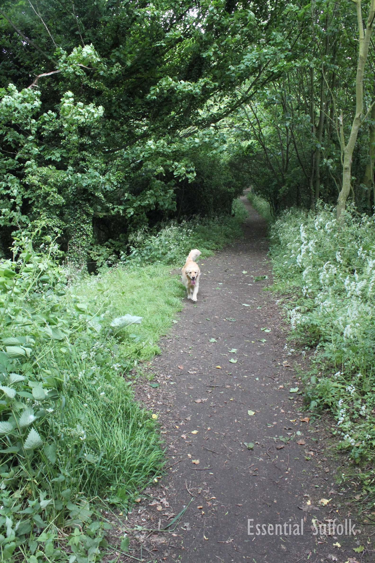 Pin Mill Dog Walk 2 04.jpg