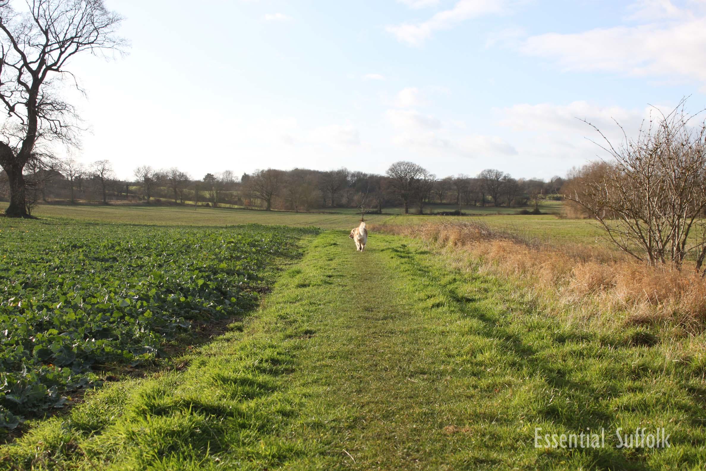 Sibton Dog Walk 1 01.jpg