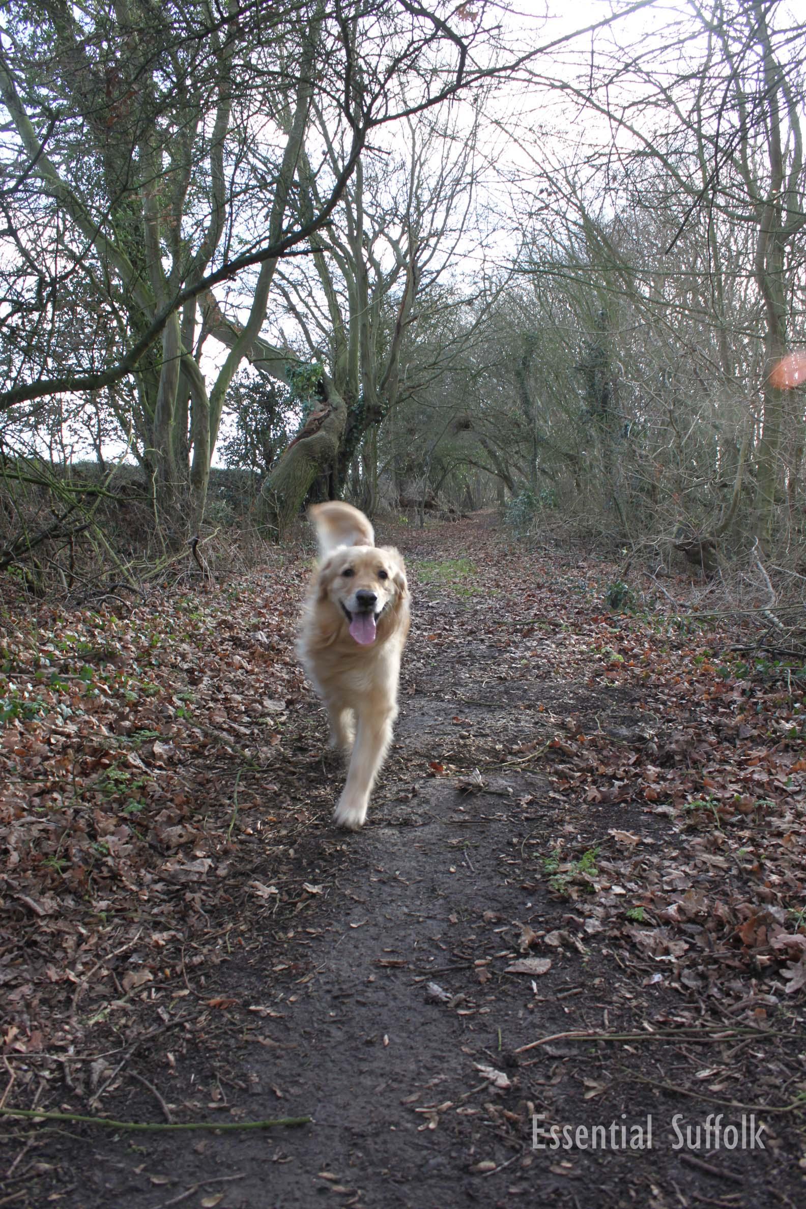 Sibton Dog Walk 1 04.jpg
