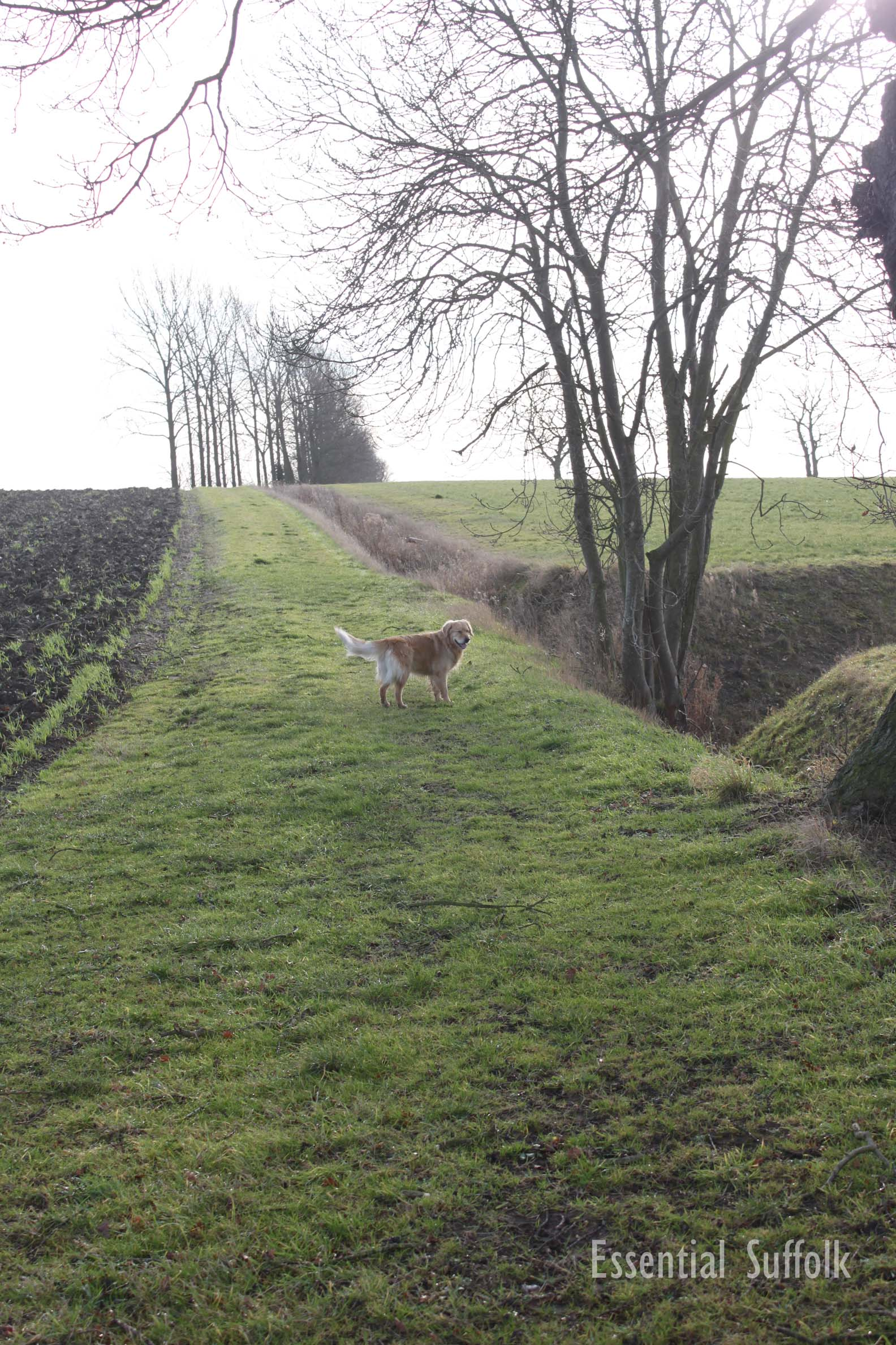 Sibton Dog Walk 1 09.jpg