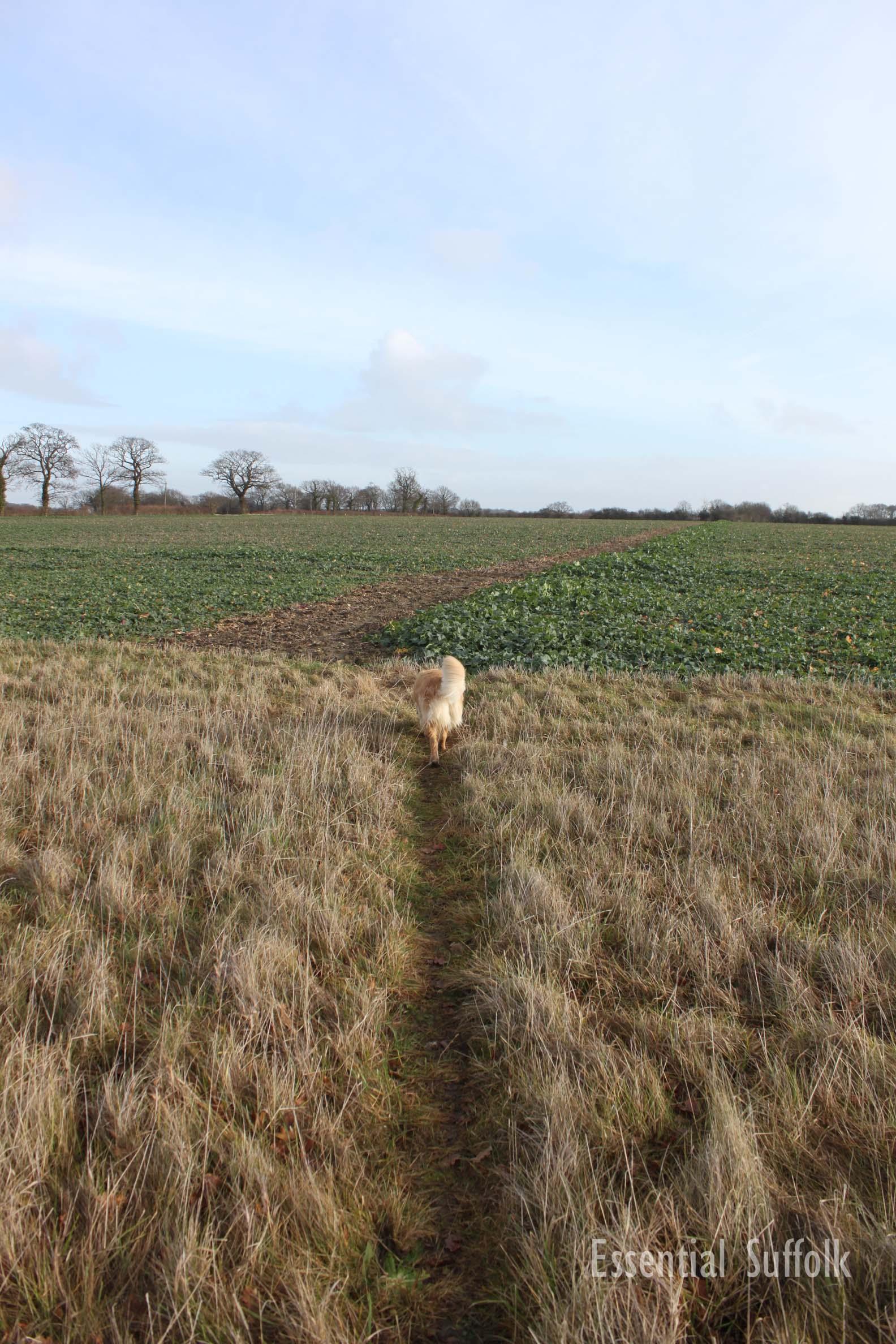Sibton Dog Walk 1 10.jpg