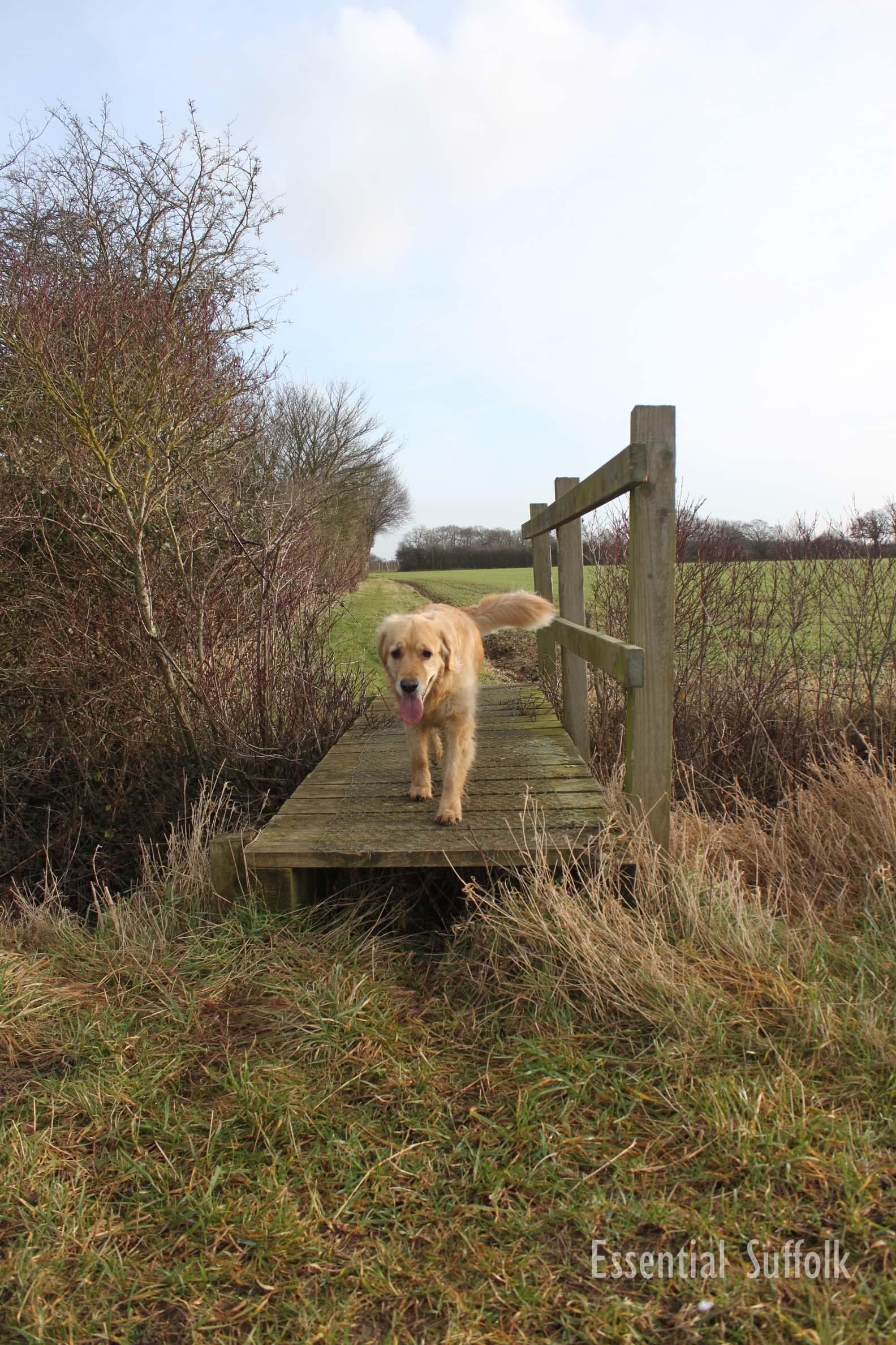Sibton Dog Walk 1 12.jpg
