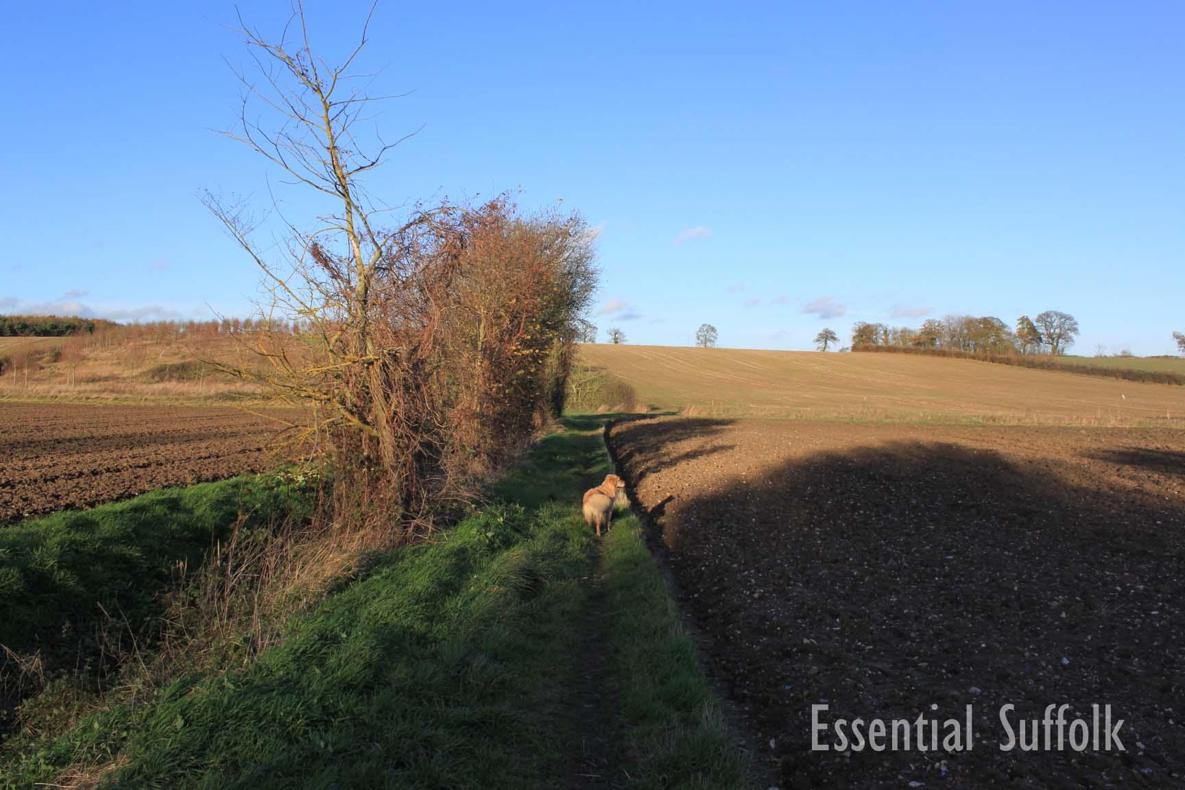 Sibton Dog Walk 2 03.jpg