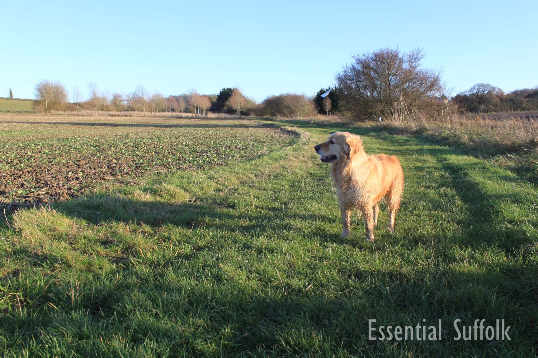 Sibton Dog Walk 2 05.jpg
