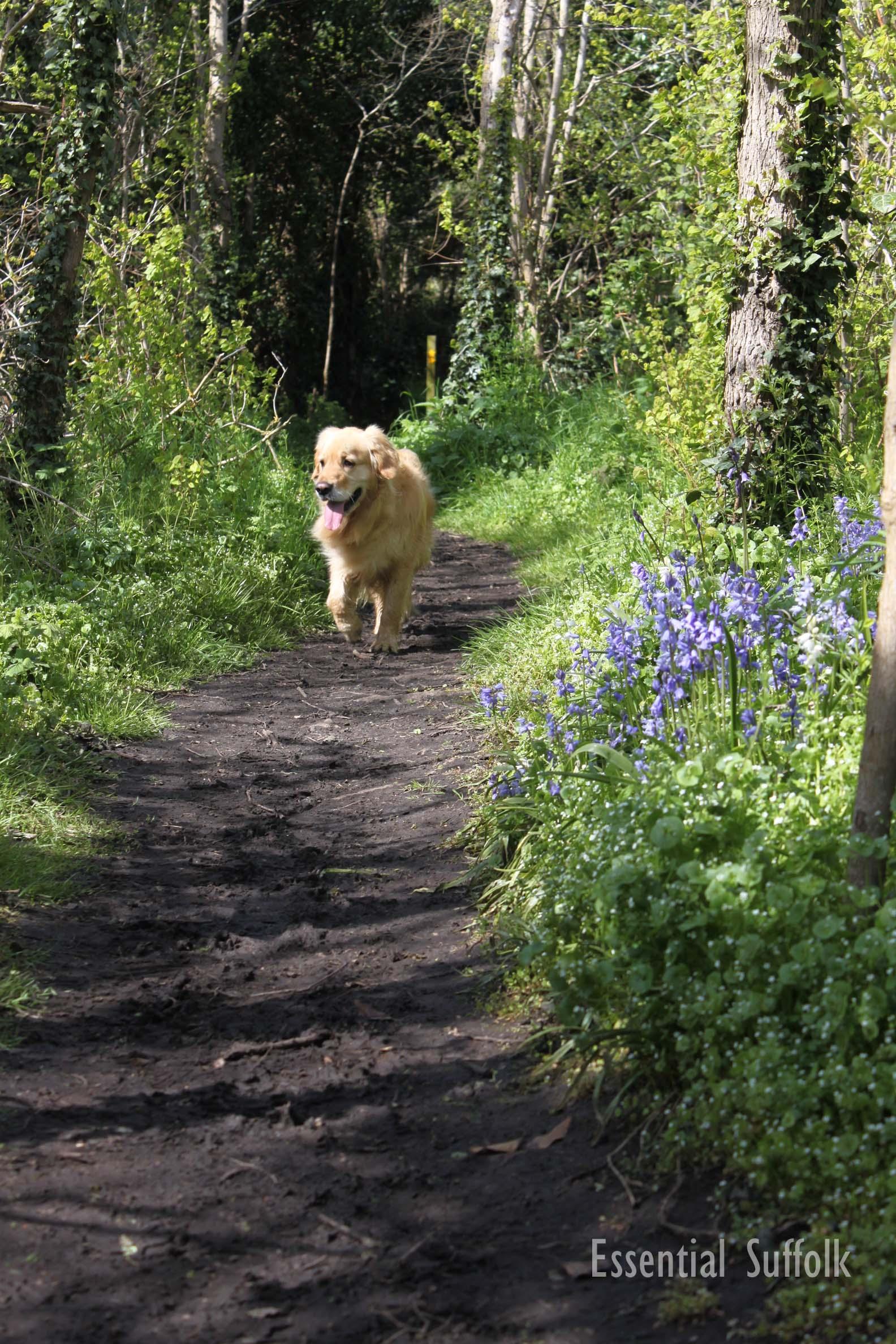 Waldringfield Dog Walk 12.jpg