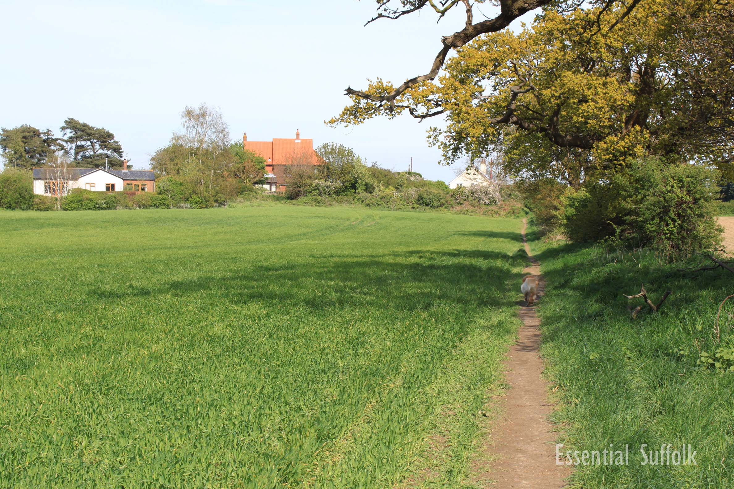 Waldringfield Dog Walk 13.jpg