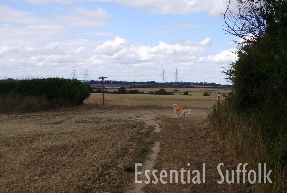 Westerfield Dog Walk 01.jpg