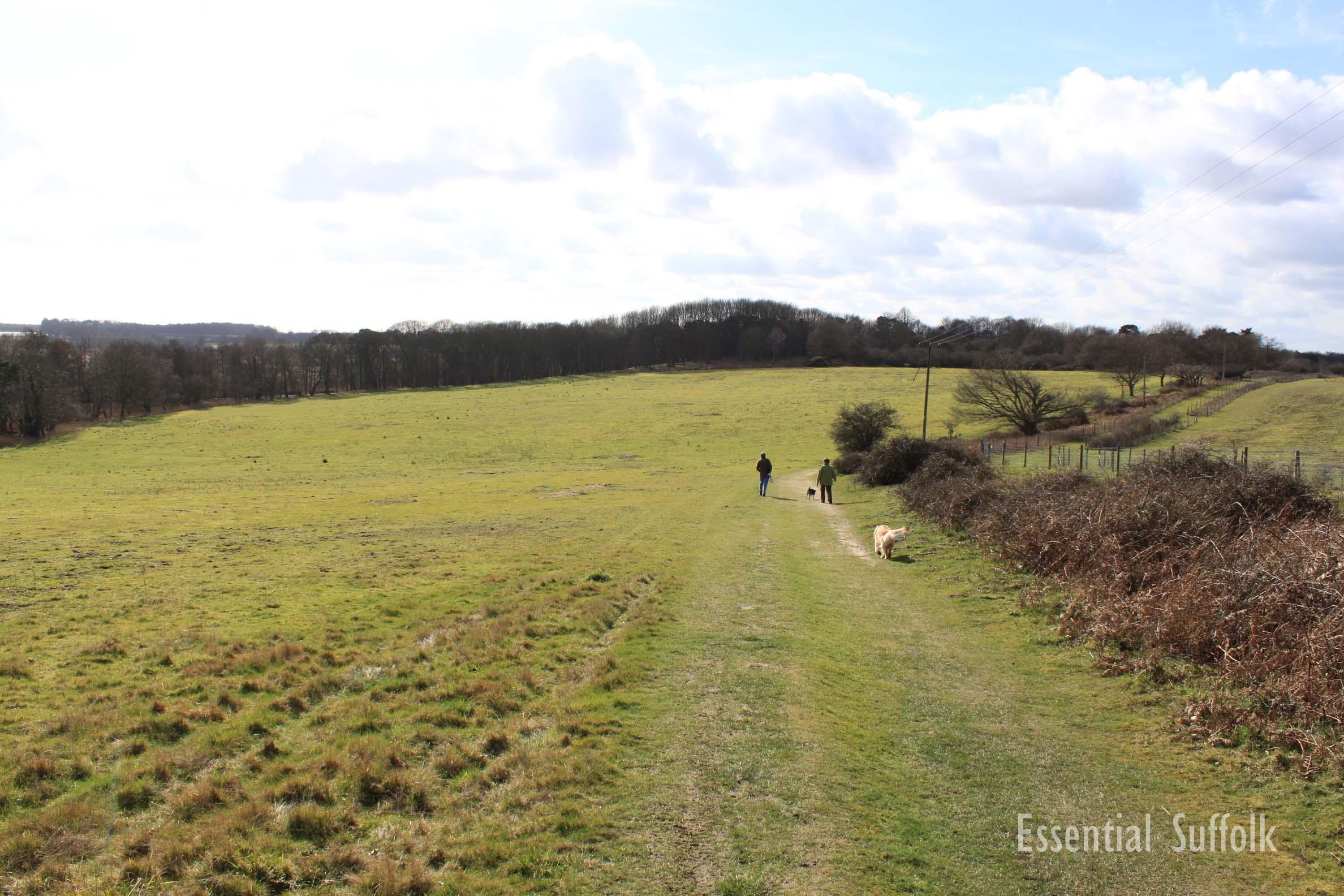 Westleton Dog Walk 1 10.jpg