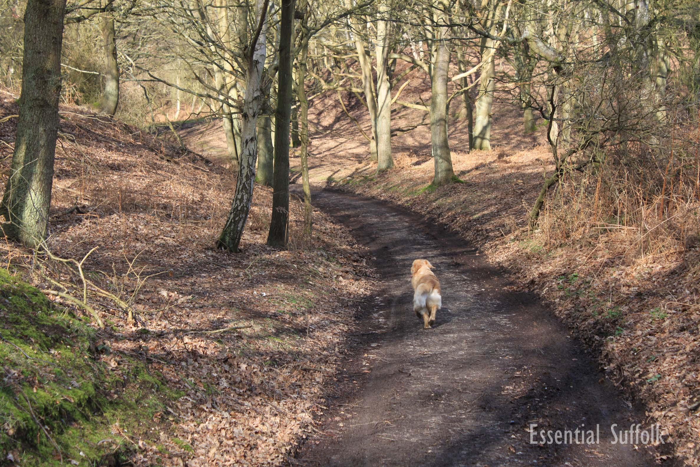 Westleton Dog Walk 1 15.jpg