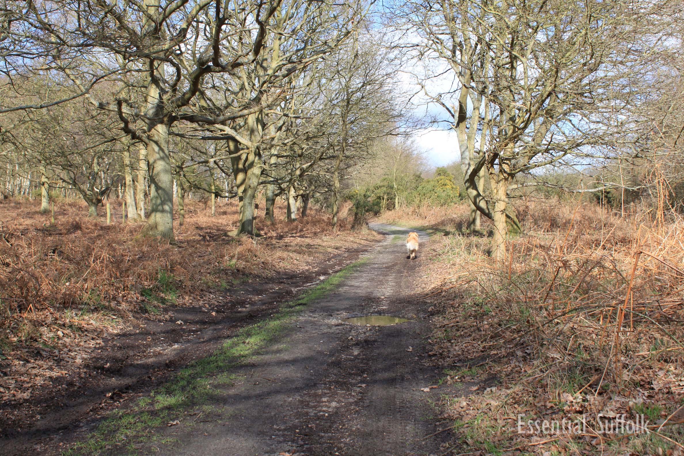 Westleton Dog Walk 1 14.jpg